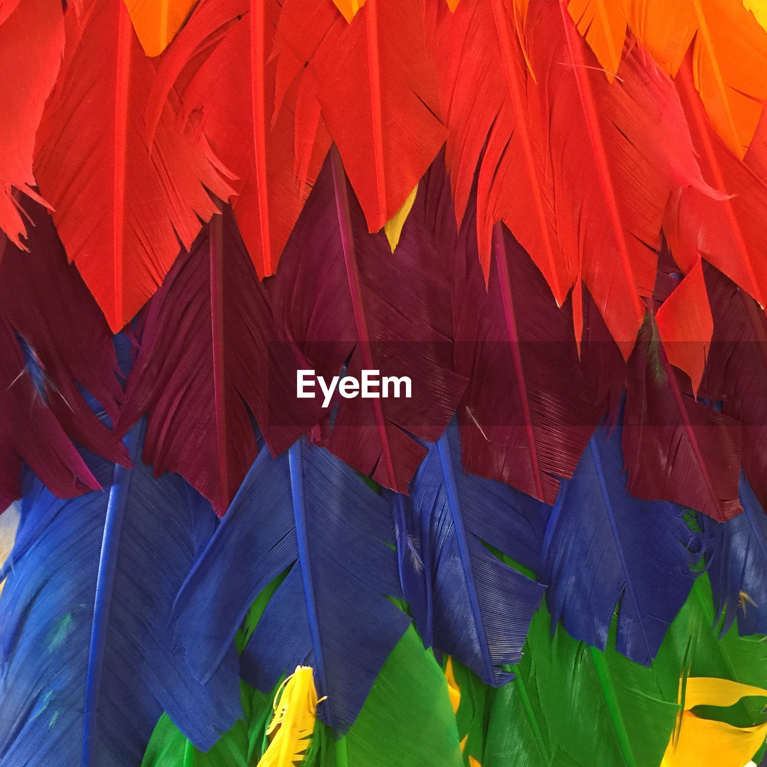 Full frame of multi colored feathers