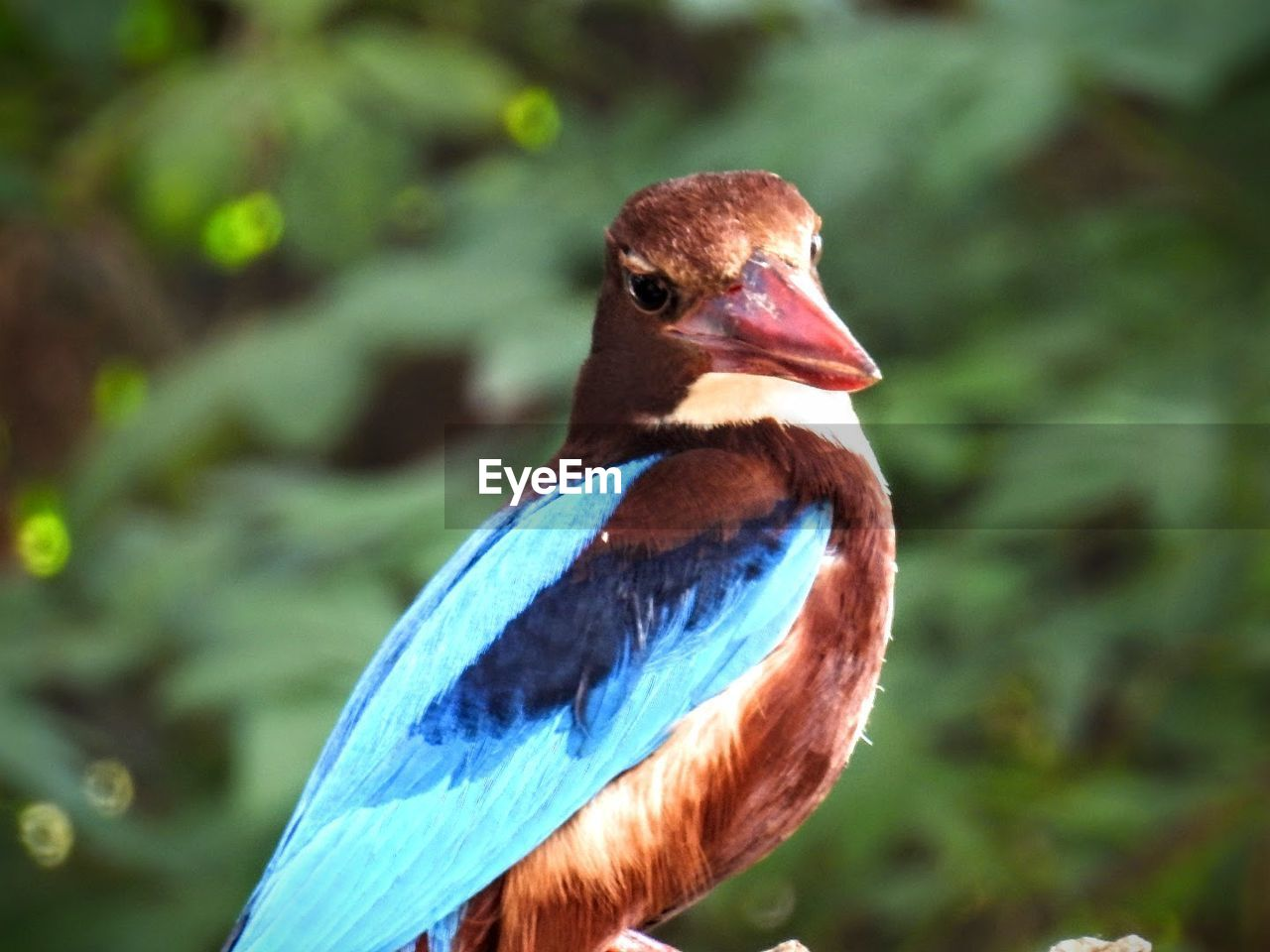 animal themes, one animal, animals in the wild, bird, focus on foreground, animal wildlife, beak, nature, close-up, day, no people, perching, outdoors, beauty in nature