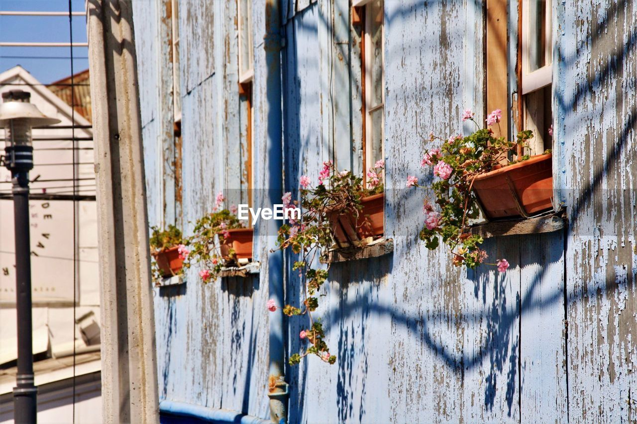 Flower pots on windows of apartments