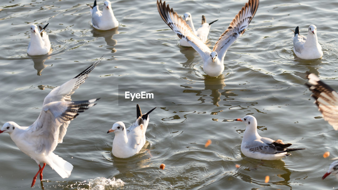 animal wildlife, group of animals, animals in the wild, animal themes, bird, vertebrate, water, animal, lake, no people, nature, large group of animals, swimming, day, high angle view, beauty in nature, waterfront, water bird, white color, outdoors, seagull, flock of birds