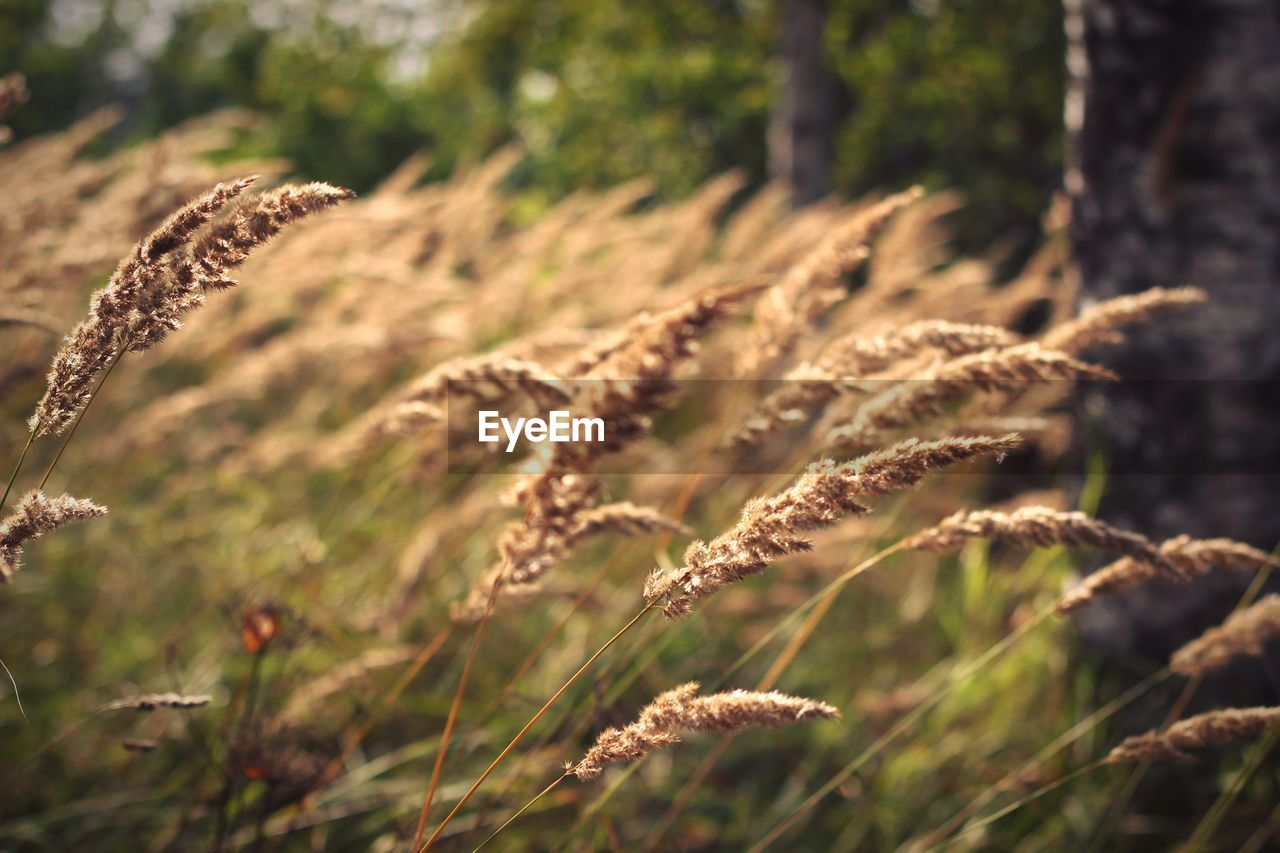 plant, growth, nature, focus on foreground, beauty in nature, land, field, tranquility, no people, day, close-up, selective focus, sunlight, outdoors, grass, brown, dry, fragility, tranquil scene, vulnerability