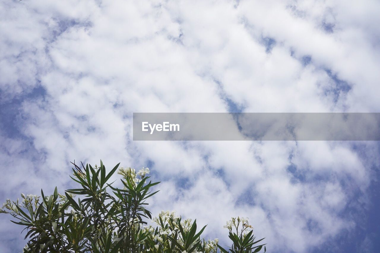 low angle view, sky, nature, cloud - sky, growth, beauty in nature, no people, day, outdoors, tree