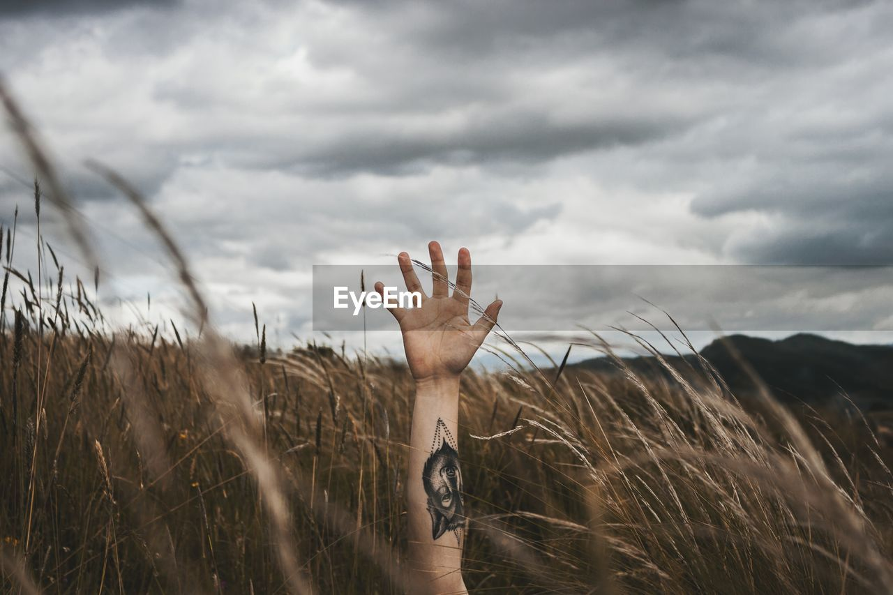 Cropped Hand Of Mid Adult Man With Tattoo Amidst Plants Against Cloudy Sky