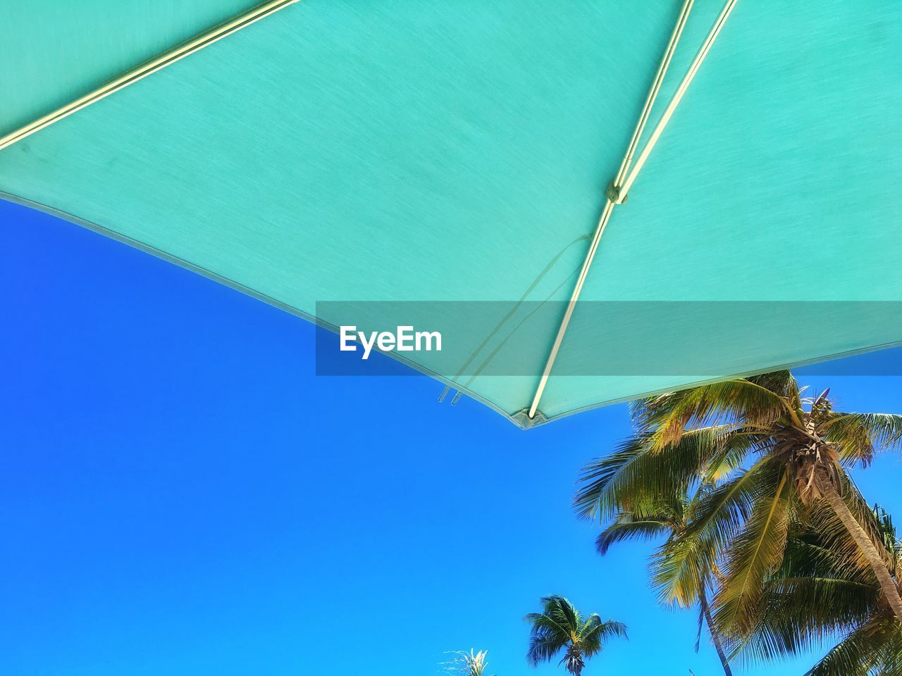 blue, low angle view, clear sky, no people, day, outdoors, palm tree, tree, sky, nature, close-up