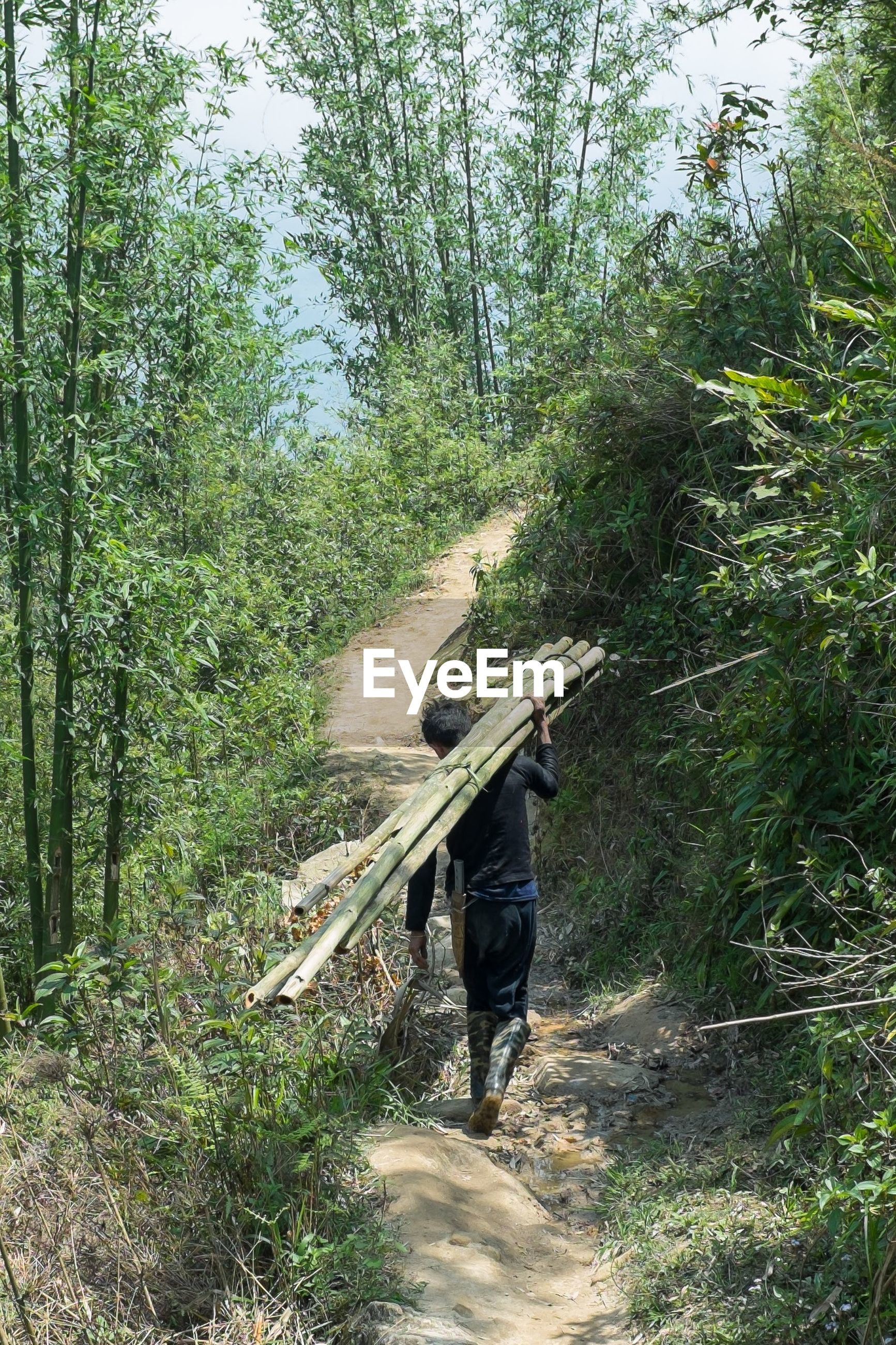 Rear view of man holding bamboo while walking amidst trees