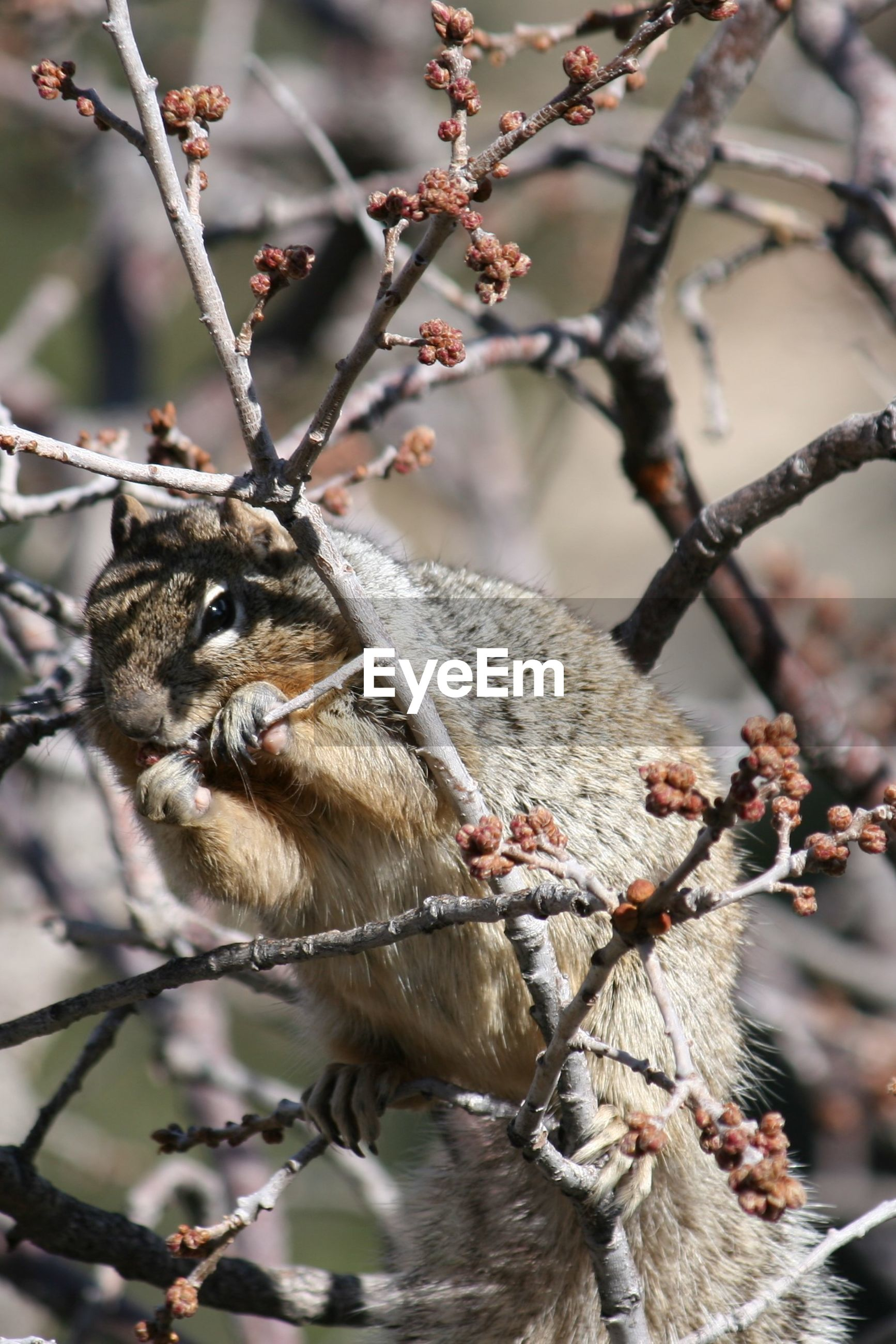 Low angle view of a tree with squirrel
