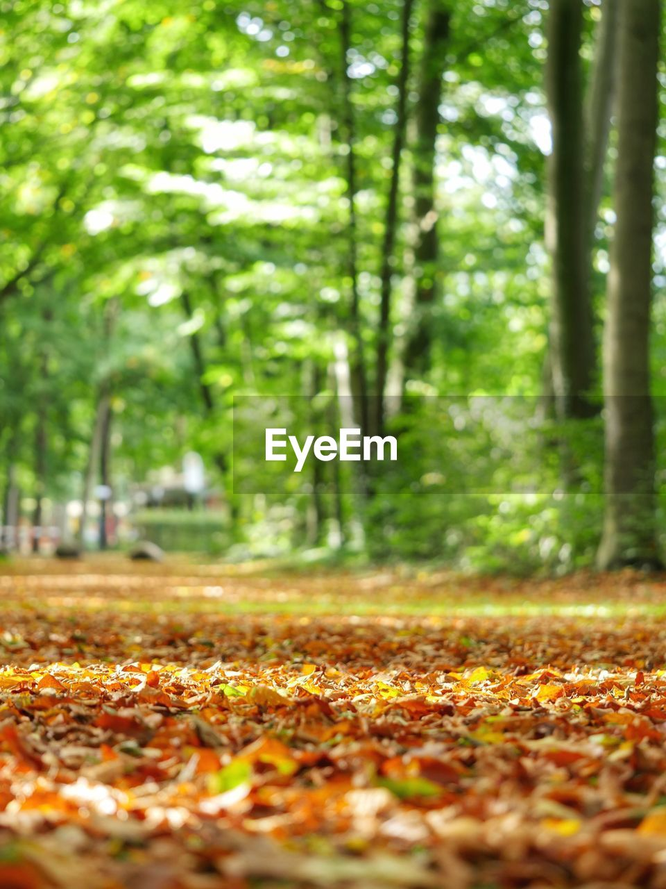 autumn, leaf, nature, change, tree, tranquility, beauty in nature, outdoors, forest, day, growth, no people