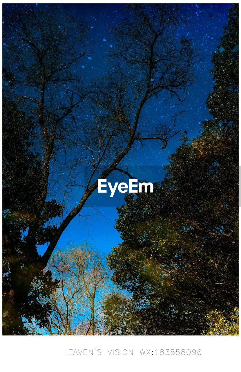 tree, plant, transfer print, auto post production filter, no people, nature, sky, low angle view, branch, outdoors, beauty in nature, blue, growth, night, text, bare tree, tranquility, scenics - nature, clear sky