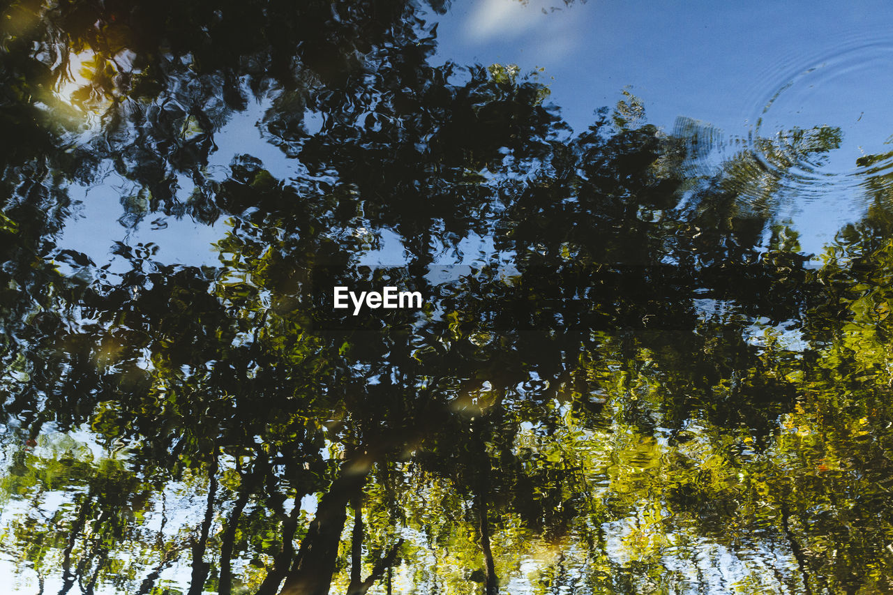 tree, nature, growth, low angle view, forest, beauty in nature, outdoors, no people, sky, day