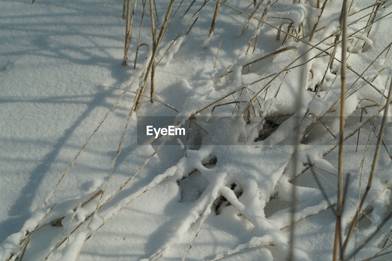 winter, cold temperature, snow, white color, nature, weather, no people, day, outdoors, frozen, animal themes, close-up, beauty in nature