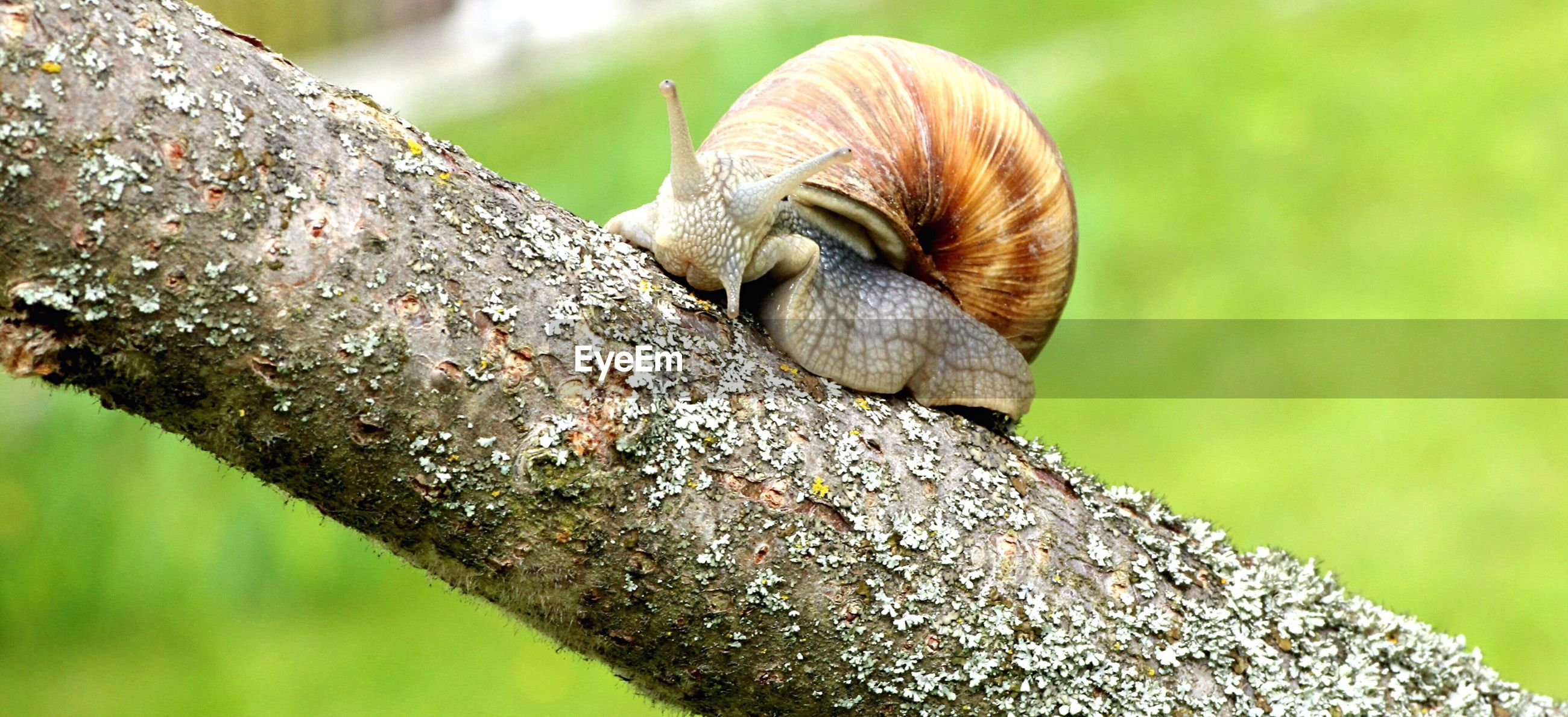 Close-up of snail on branch