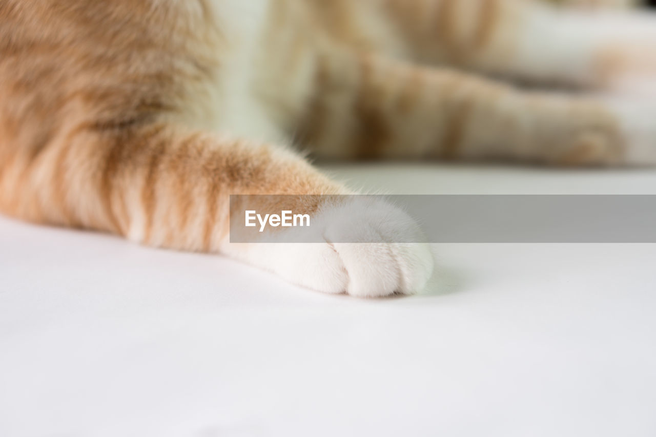 domestic, pets, domestic animals, mammal, cat, feline, domestic cat, animal, one animal, animal body part, animal themes, close-up, paw, relaxation, vertebrate, no people, indoors, animal leg, selective focus, bed, whisker