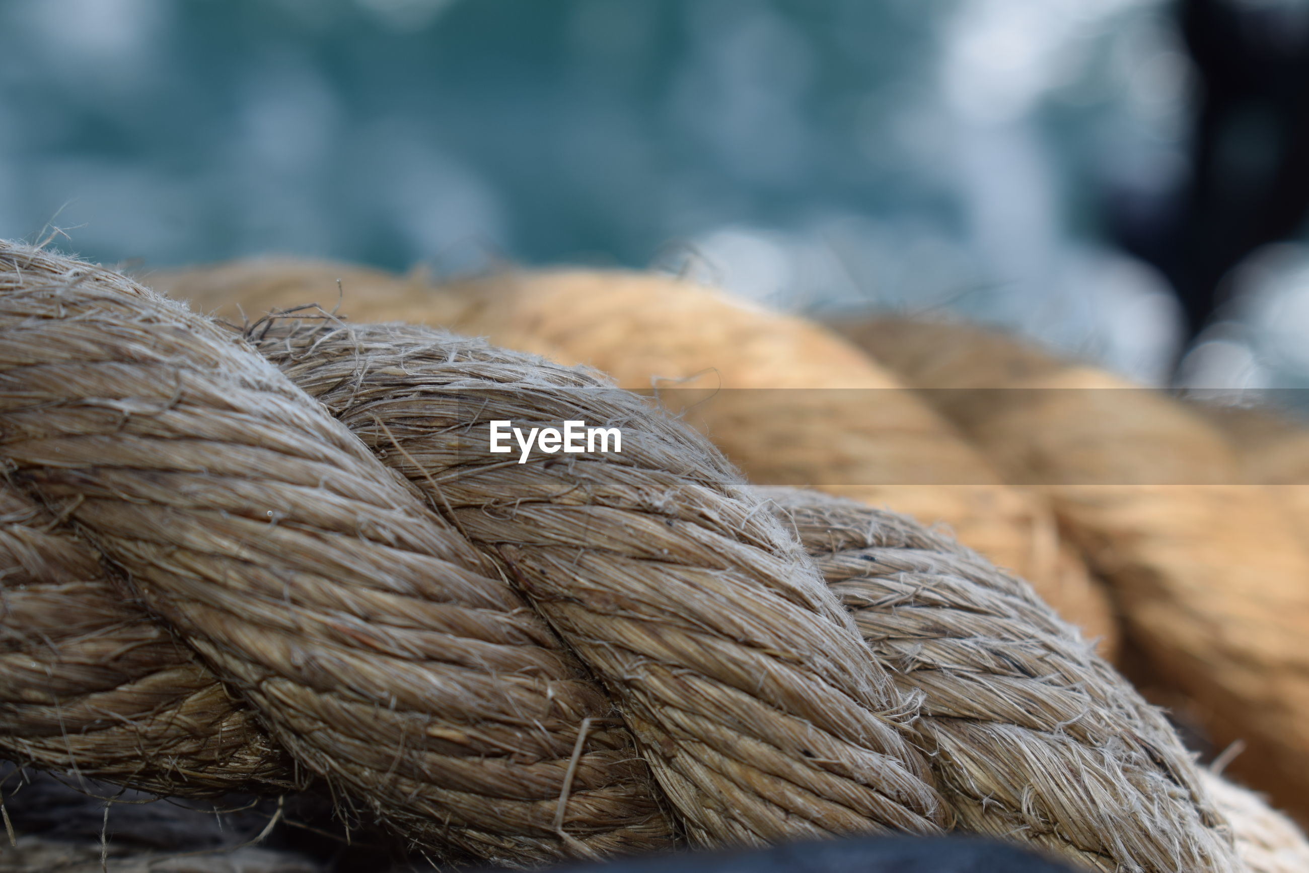 CLOSE-UP OF A BIRD ON ROPE