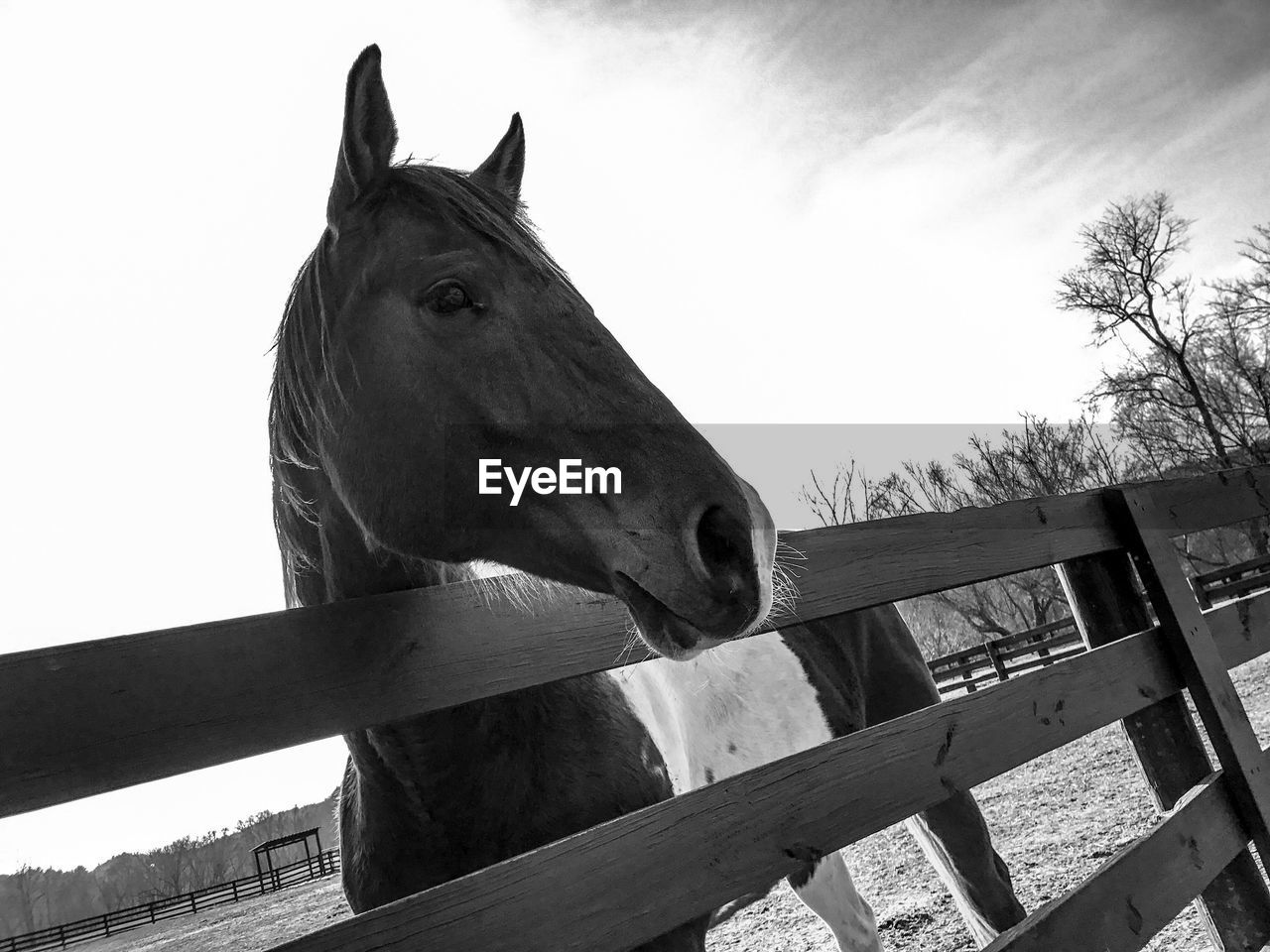 horse, paddock, domestic animals, animal themes, one animal, mammal, animal head, stable, herbivorous, railing, sky, day, livestock, wood - material, no people, outdoors, low angle view, standing, portrait, close-up, oil pump