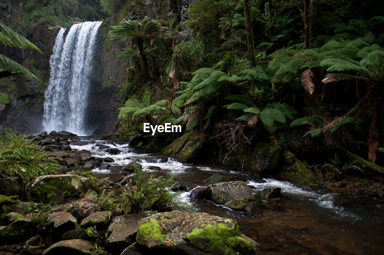 water, rock, beauty in nature, solid, flowing water, rock - object, motion, long exposure, forest, waterfall, nature, plant, flowing, tree, scenics - nature, no people, land, blurred motion, day, stream - flowing water, outdoors, power in nature, rainforest, running water