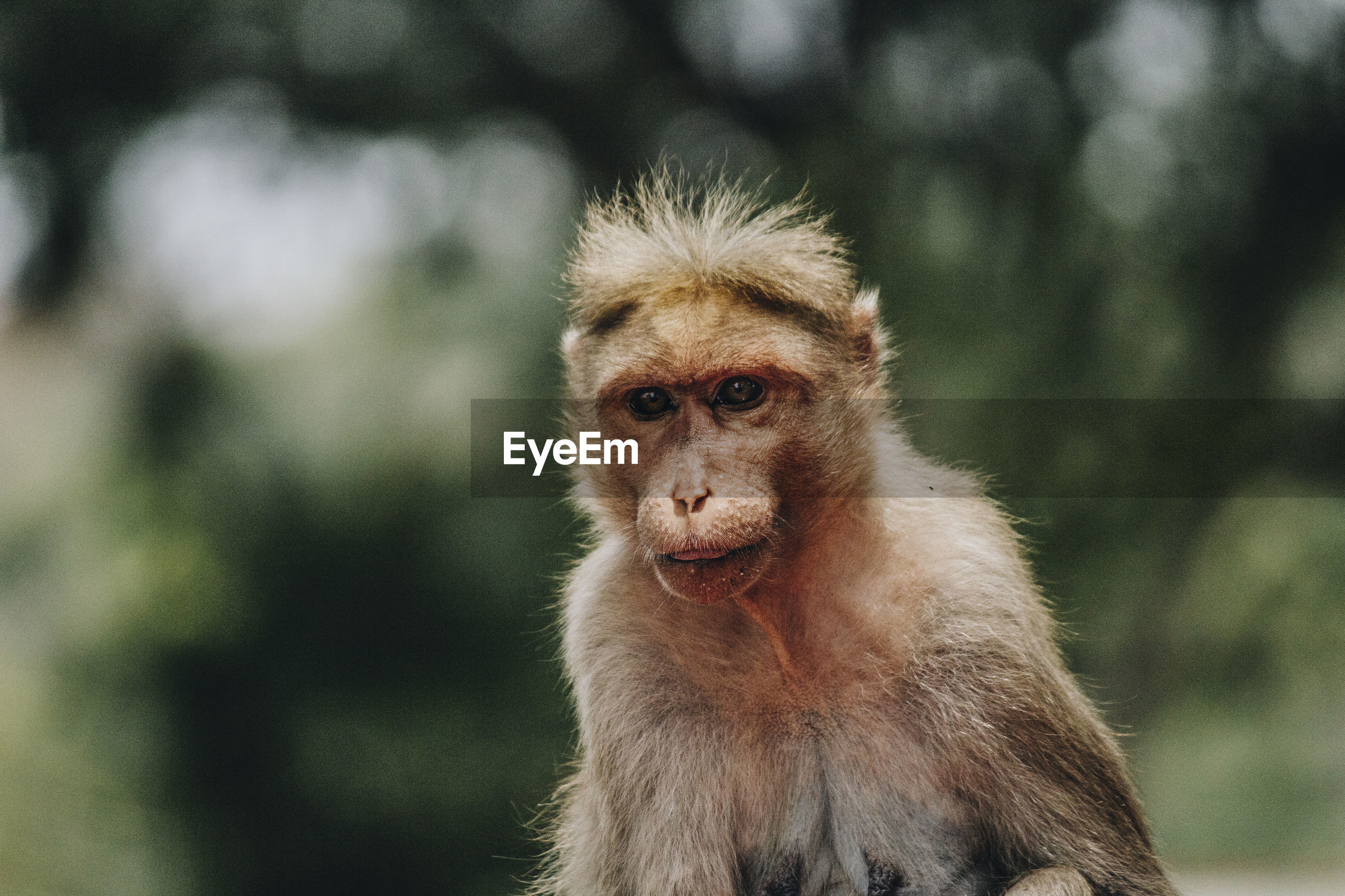 Close-up portrait of monkey