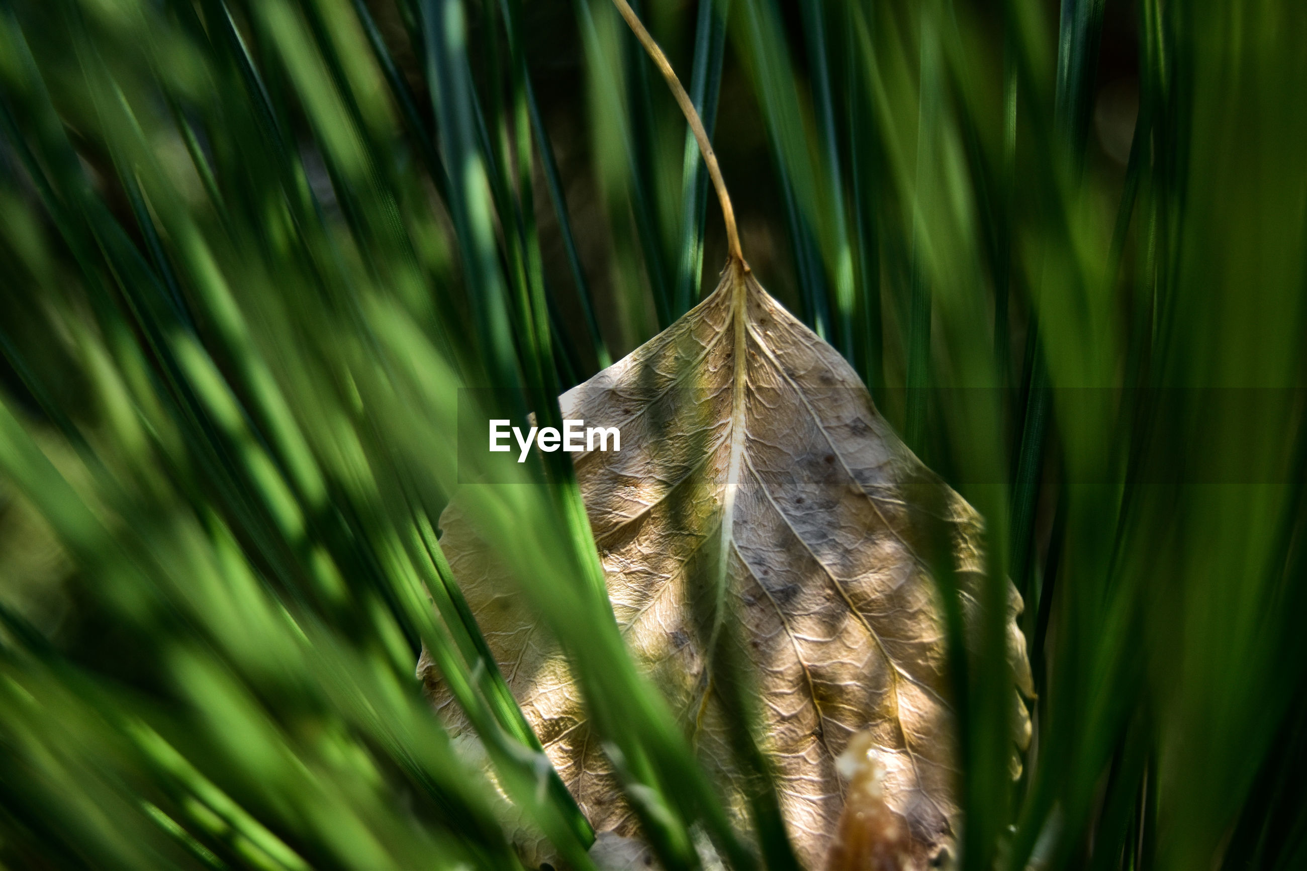 Close-up of leaf on grass