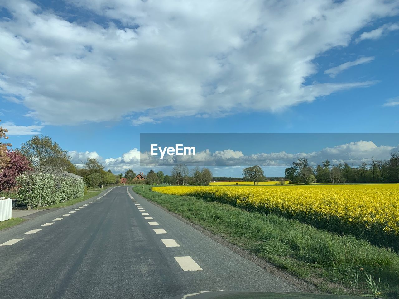 EMPTY ROAD ALONG PLANTS AND YELLOW FIELD