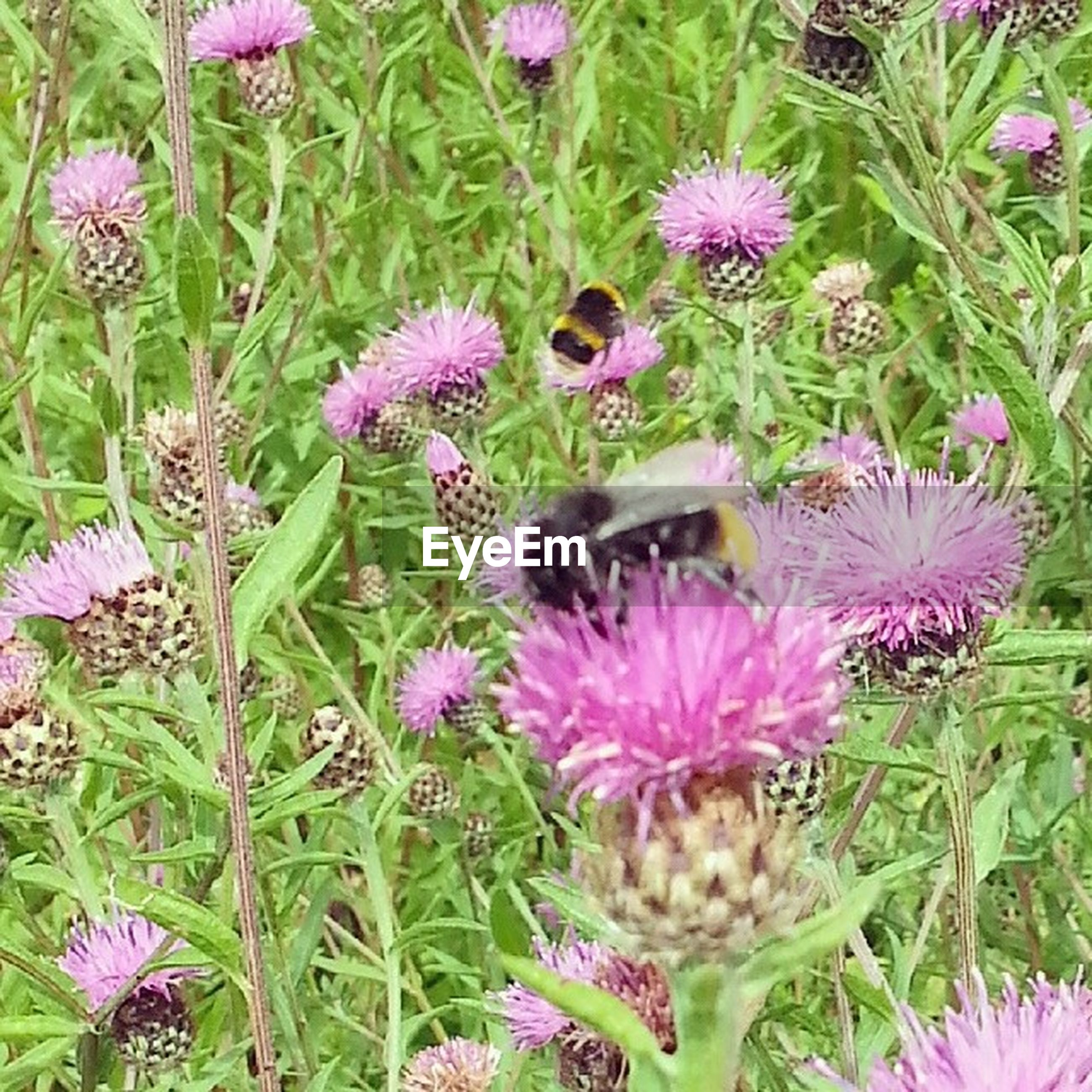 flower, freshness, fragility, purple, growth, petal, beauty in nature, insect, plant, flower head, pink color, nature, one animal, close-up, animals in the wild, blooming, animal themes, pollination, wildlife, focus on foreground