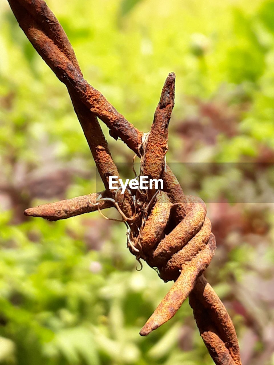 focus on foreground, plant, close-up, nature, no people, day, tree, rusty, branch, growth, outdoors, twisted, green color, beauty in nature, metal, plant part, twig, leaf, plant stem, tranquility, intertwined
