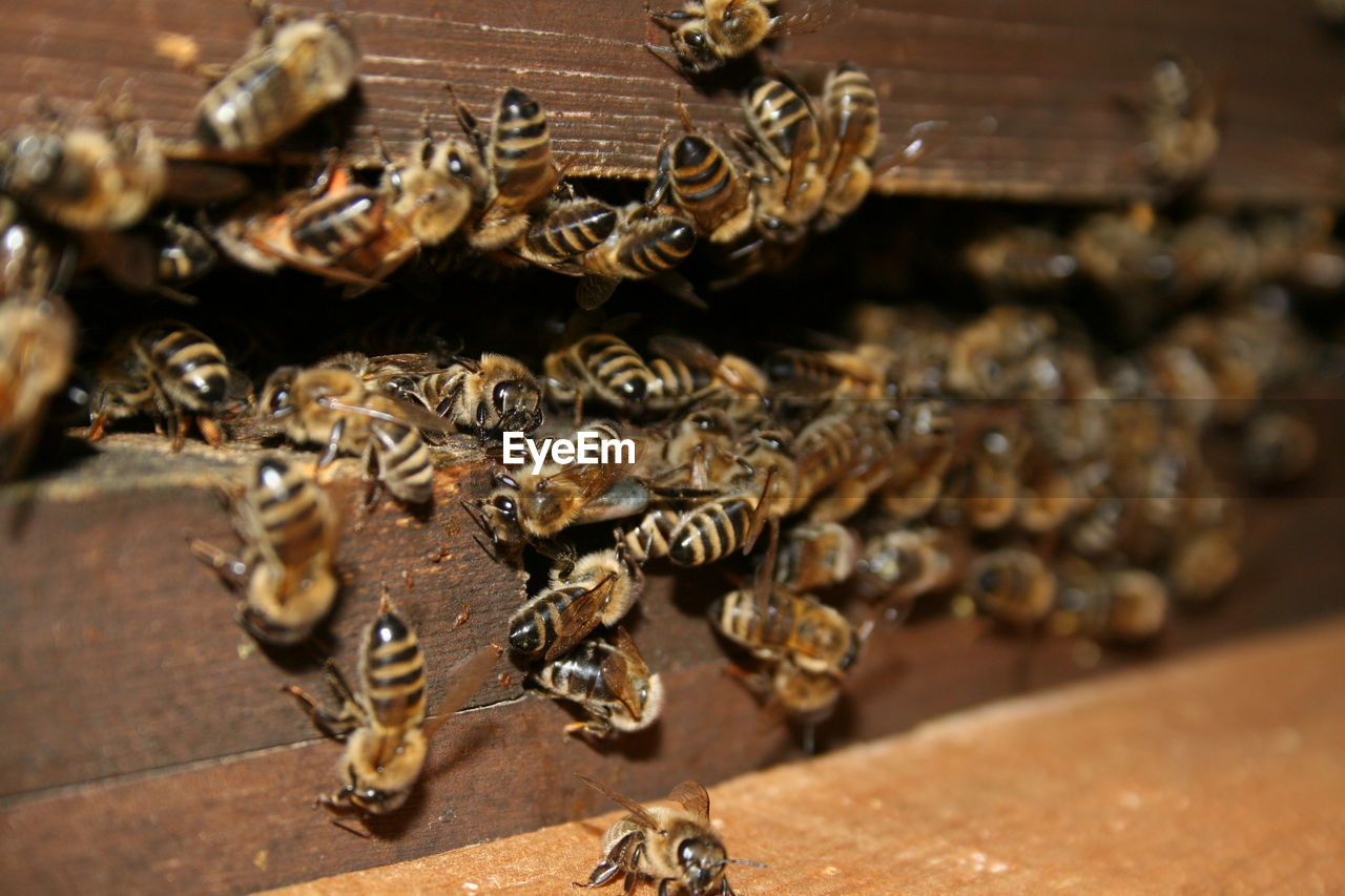 group of animals, bee, apiculture, close-up, animal themes, insect, animal, honey bee, animal wildlife, invertebrate, large group of animals, animals in the wild, beehive, no people, wood - material, selective focus, beauty in nature, day, nature, indoors