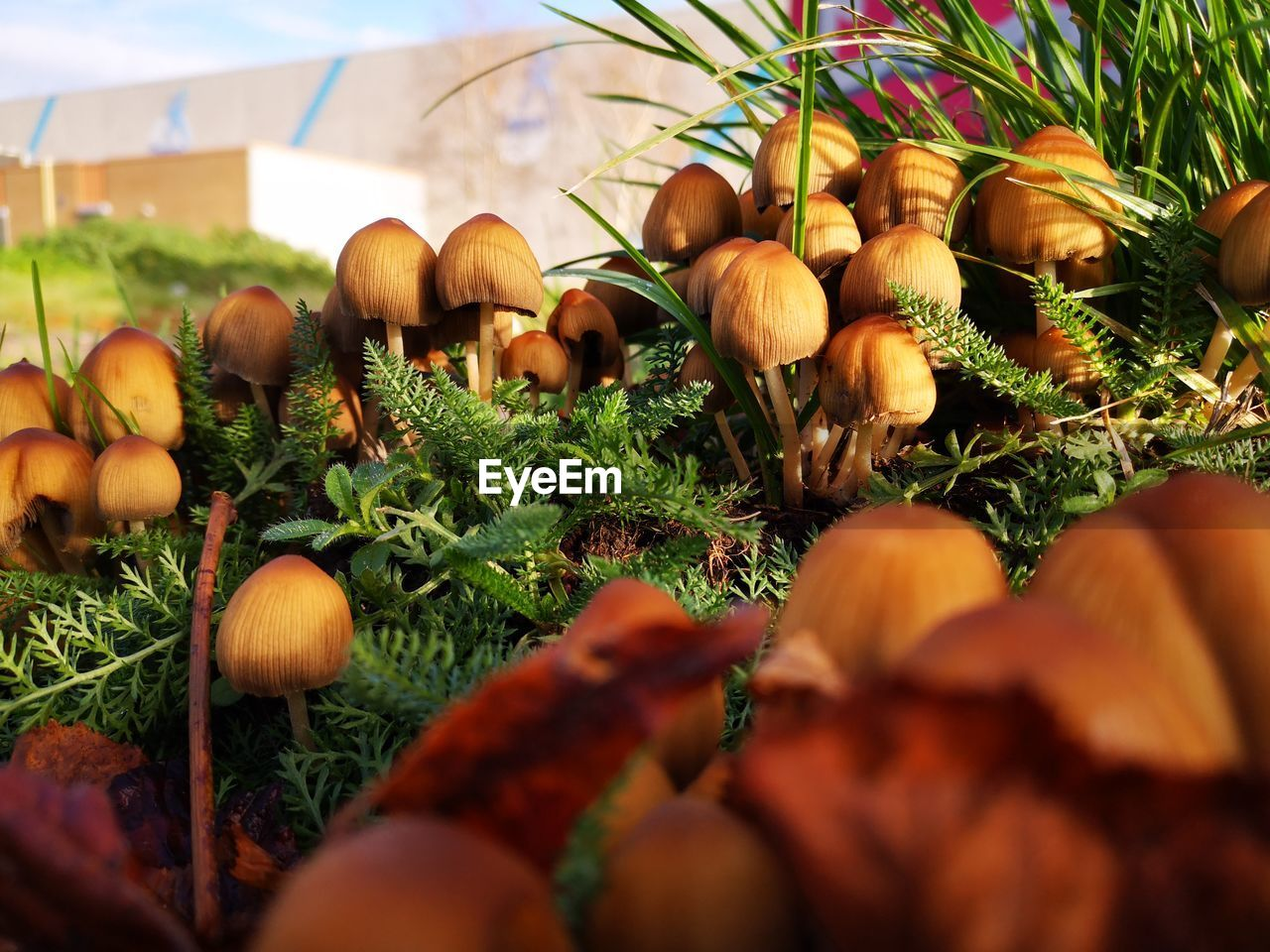 food, food and drink, selective focus, vegetable, freshness, healthy eating, wellbeing, close-up, plant, growth, land, nature, day, no people, field, fungus, mushroom, agriculture, brown, outdoors, toadstool