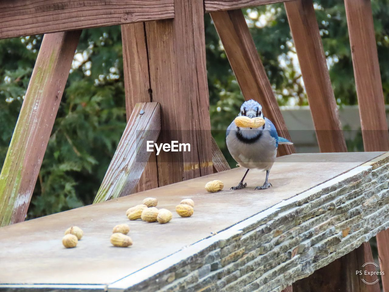 animal, wood - material, animal themes, animal wildlife, one animal, bird, animals in the wild, vertebrate, day, perching, no people, focus on foreground, food, outdoors, close-up, nature, food and drink, built structure, railing, zoology, tray