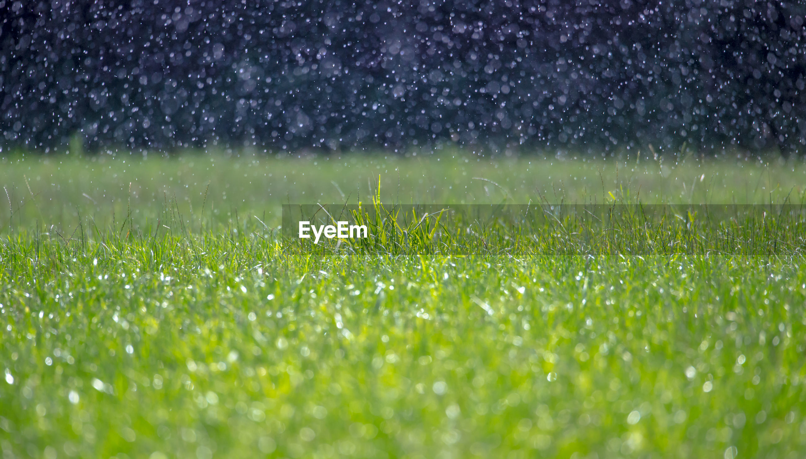 WATER DROPS ON GRASS FIELD