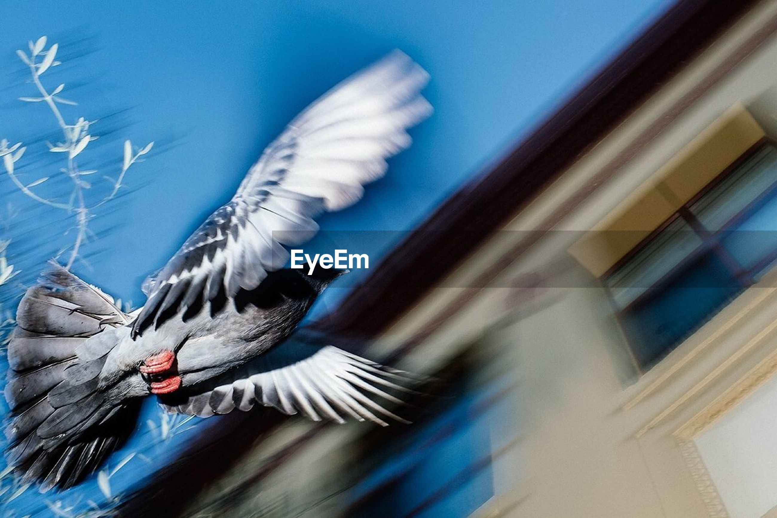 animal, animal themes, motion, blurred motion, animals in the wild, animal wildlife, bird, vertebrate, flying, spread wings, no people, one animal, day, nature, feather, selective focus, outdoors, blue, sky, low angle view, flapping
