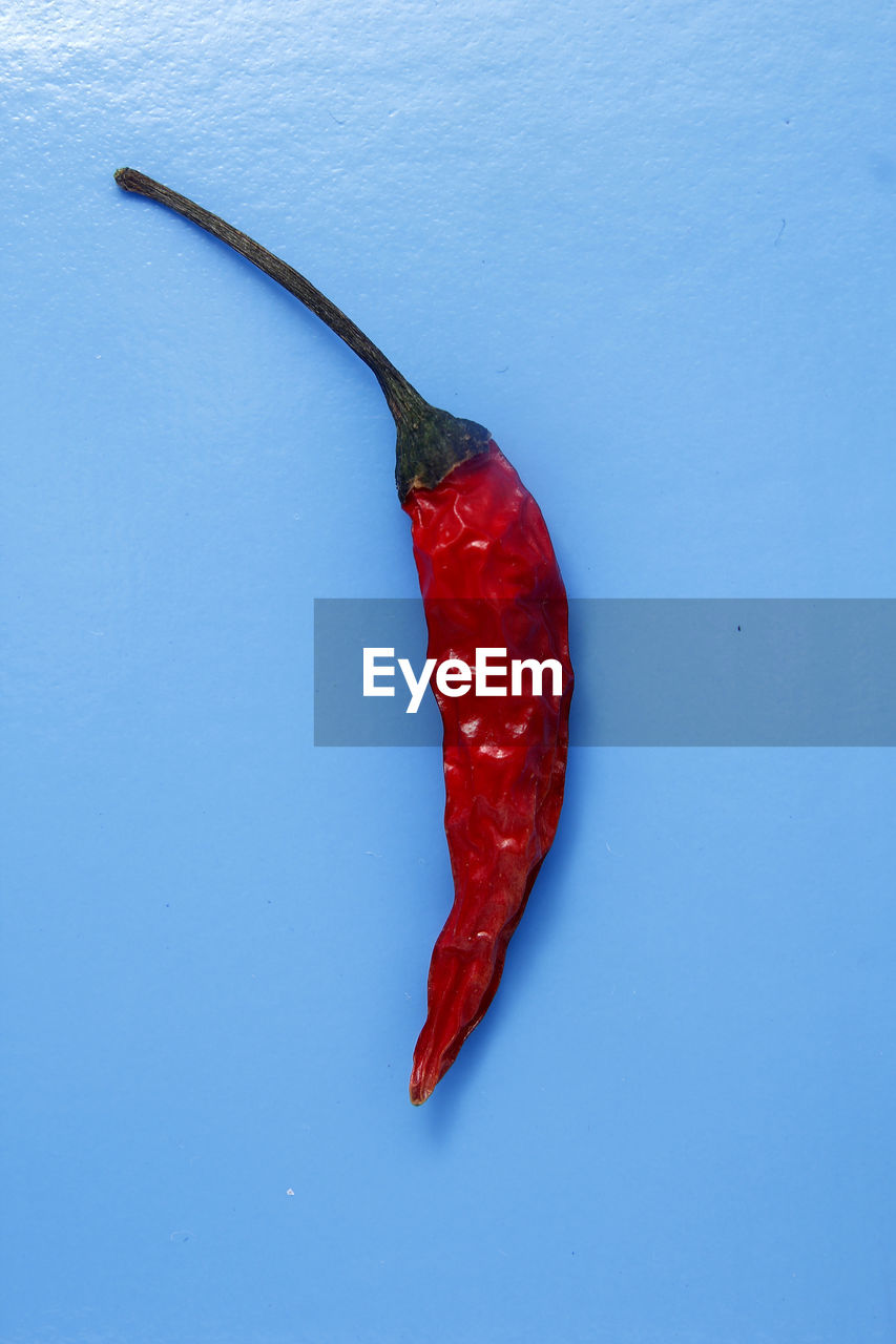 red, food and drink, food, pepper, chili pepper, red chili pepper, spice, blue, no people, freshness, vegetable, high angle view, healthy eating, wellbeing, colored background, still life, close-up, copy space, indoors, ingredient, blue background