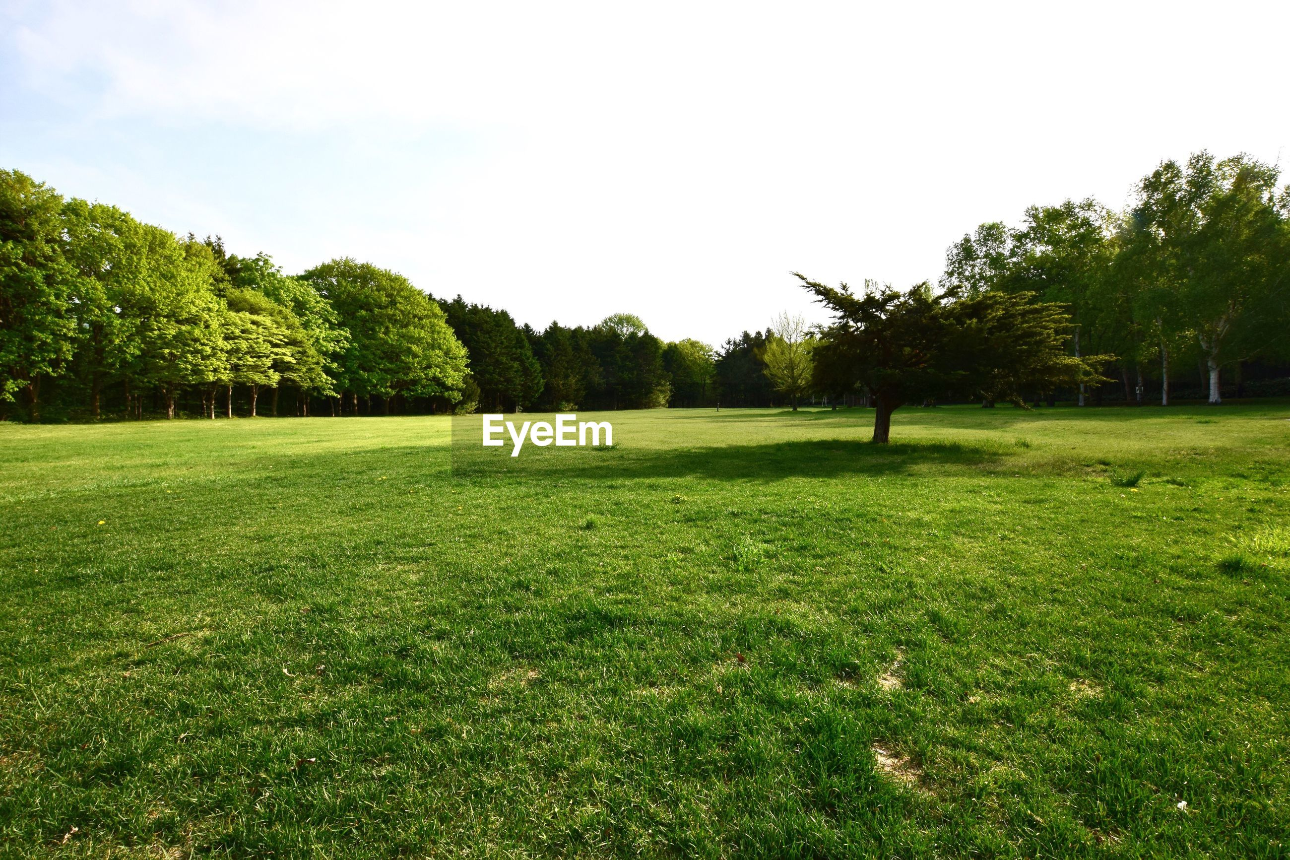 grass, tree, green color, growth, nature, field, landscape, beauty in nature, golf, green - golf course, golf course, no people, sky, outdoors, day