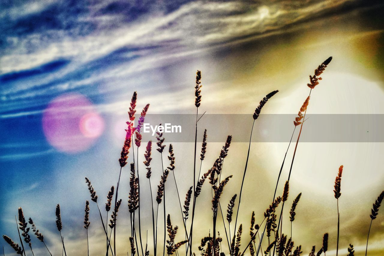 growth, nature, plant, beauty in nature, sky, no people, tranquility, outdoors, day, close-up