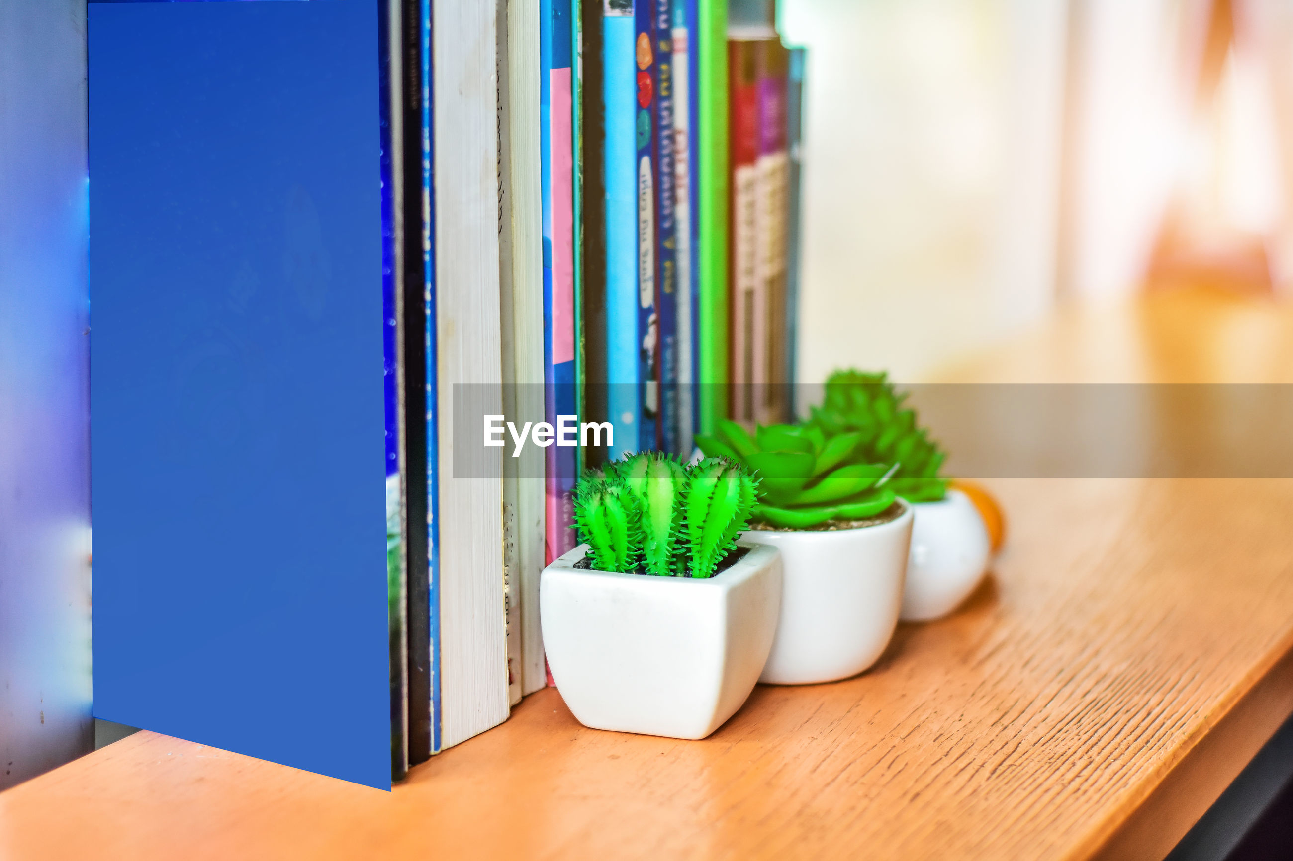Close-up of books and potted plants on wooden table