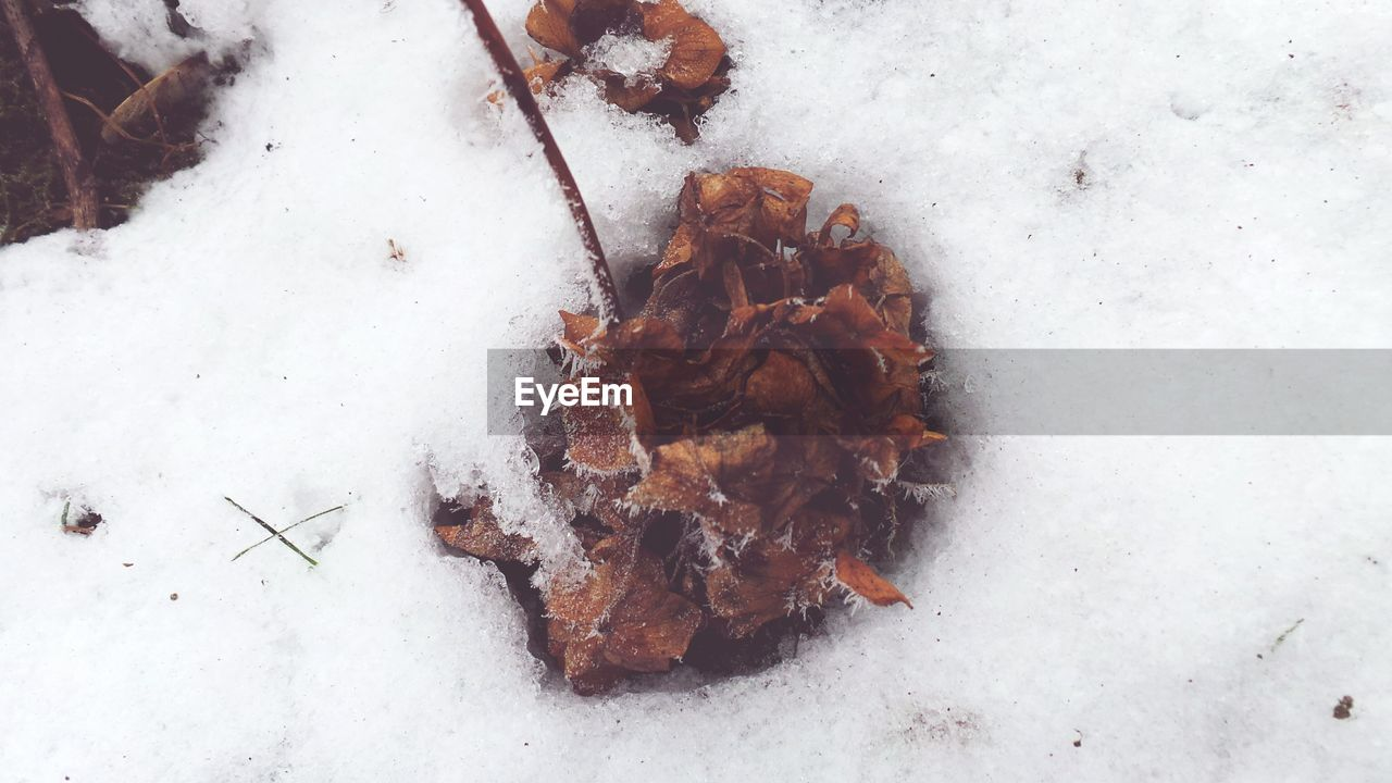 snow, cold temperature, winter, high angle view, weather, nature, leaf, no people, day, outdoors, close-up