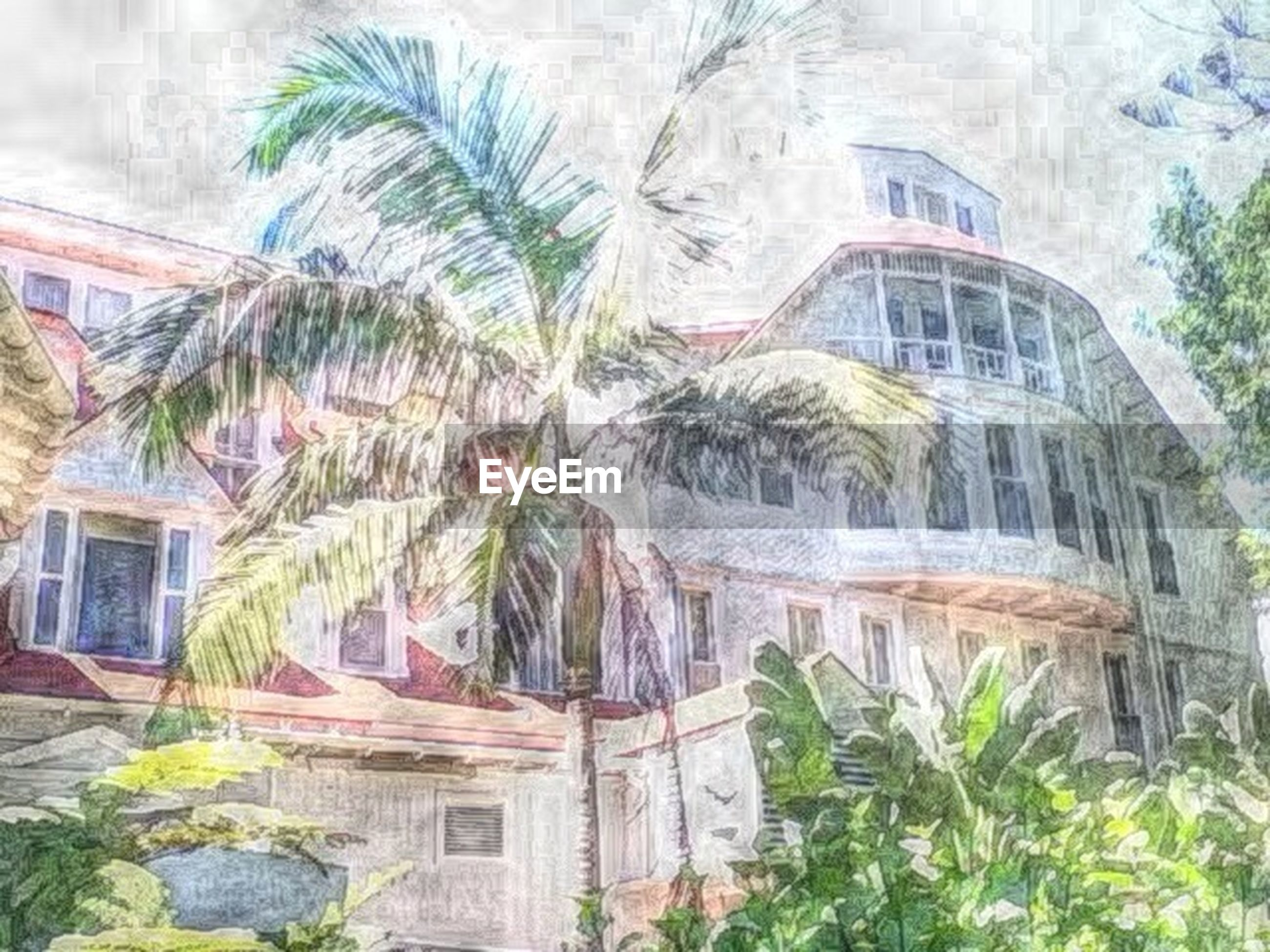 architecture, built structure, building exterior, palm tree, tree, plant, residential building, window, residential structure, house, building, growth, arch, day, city, outdoors, potted plant, no people, wall - building feature, sky