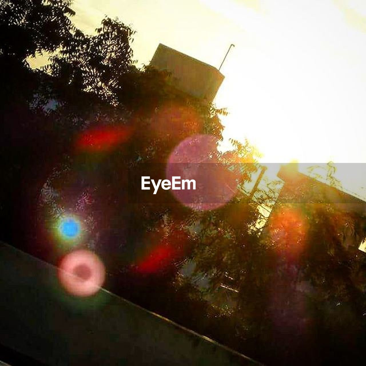 lens flare, sun, outdoors, no people, sunlight, tree, sky, multi colored, day, nature, close-up