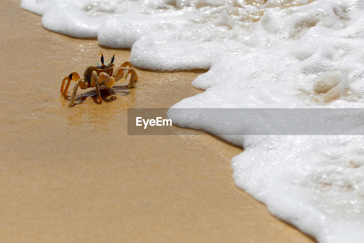 animal themes, animal, animal wildlife, sea, land, beach, animals in the wild, white color, nature, one animal, sand, close-up, water, no people, crab, day, crustacean, winter, outdoors, marine