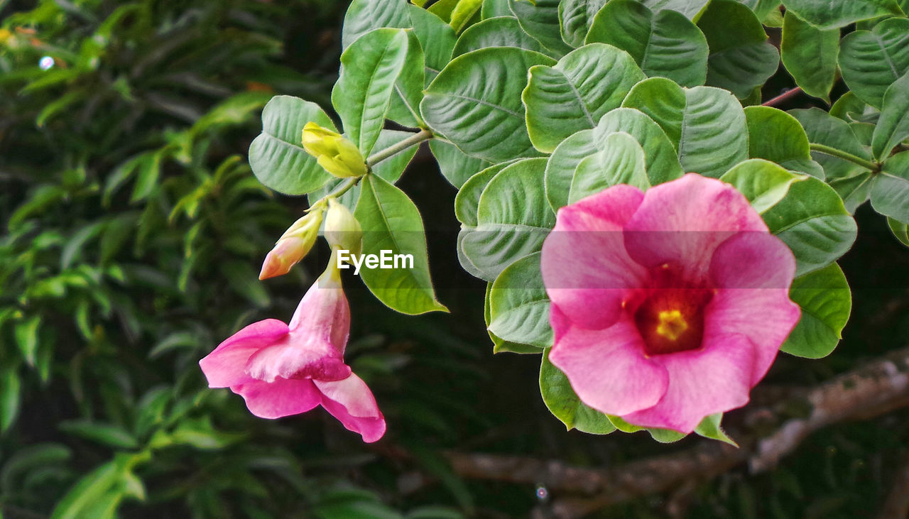 flower, growth, petal, beauty in nature, plant, nature, fragility, freshness, pink color, green color, flower head, no people, outdoors, blooming, leaf, day, close-up