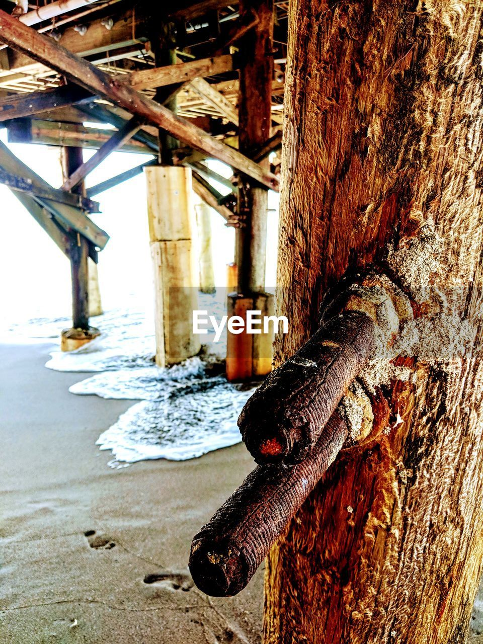 metal, rusty, wood - material, no people, day, close-up, focus on foreground, old, tree trunk, outdoors, trunk, animal, textured, animal wildlife, animal themes, architectural column, tree, nature, one animal, wood, wooden post