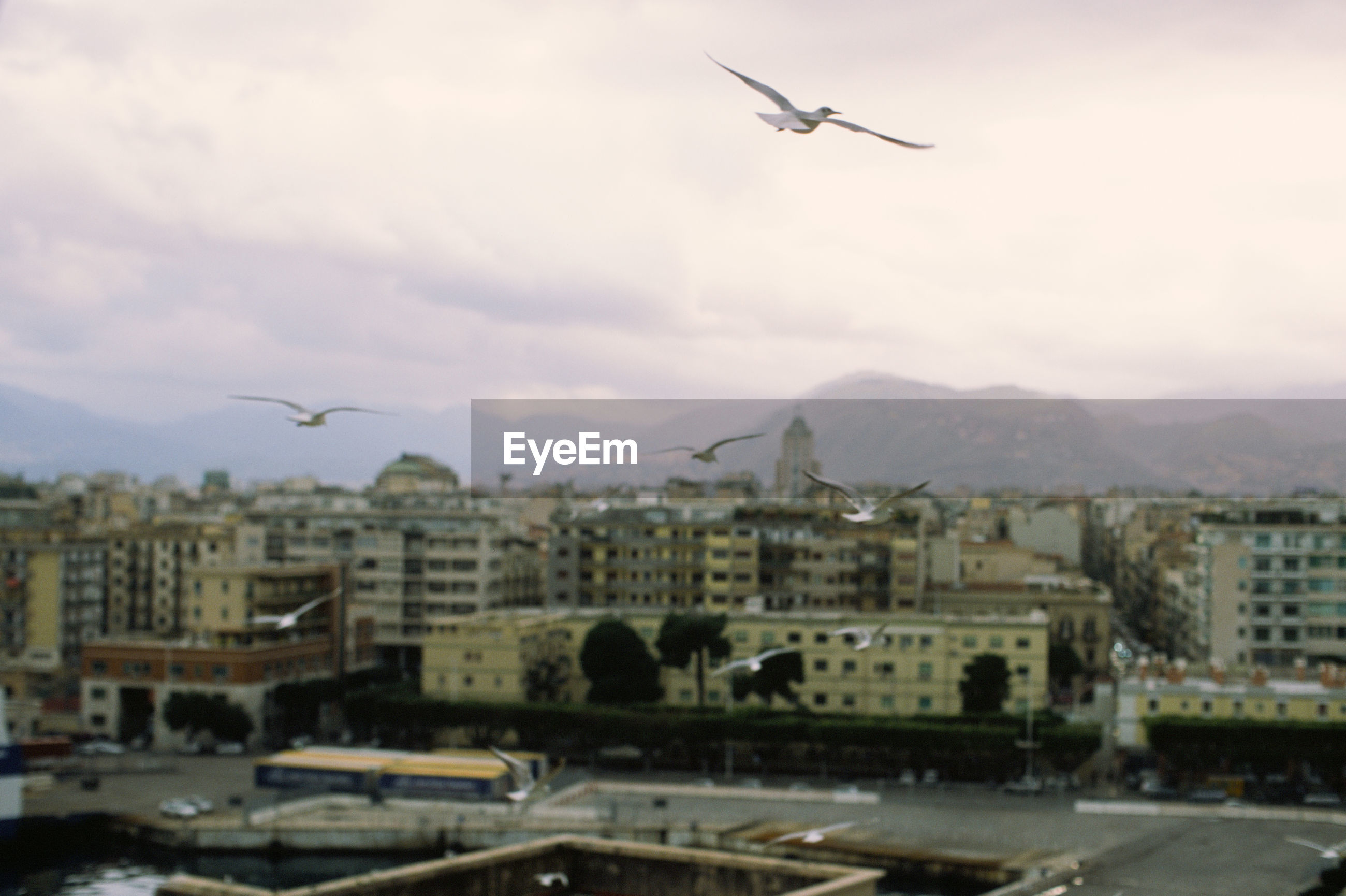 BIRDS FLYING OVER RESIDENTIAL DISTRICT