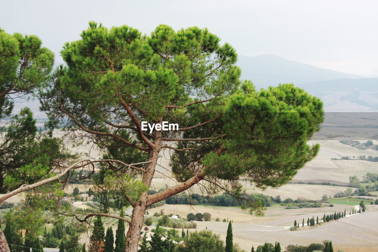tree, plant, beauty in nature, scenics - nature, tranquility, nature, water, sky, tranquil scene, mountain, no people, day, growth, environment, outdoors, non-urban scene, landscape, green color, land