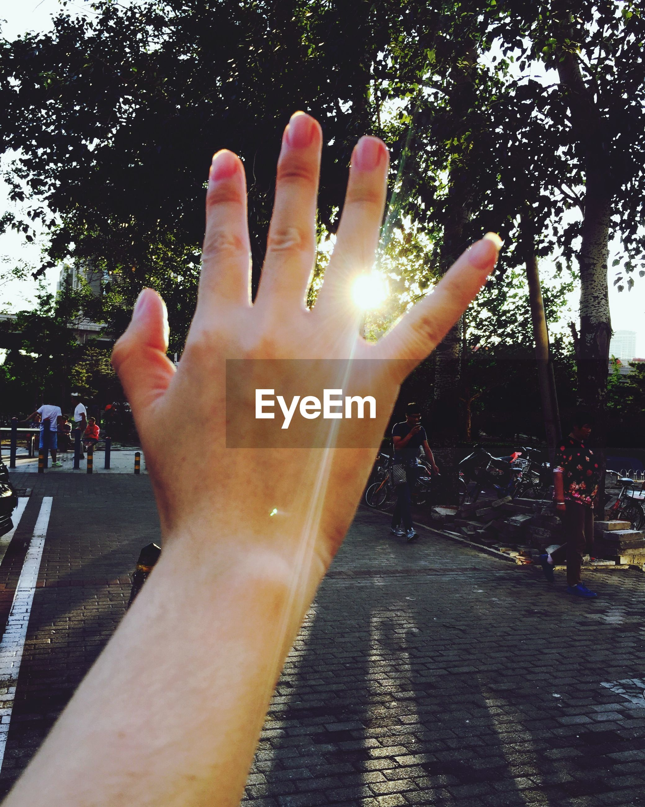 person, part of, human finger, tree, cropped, personal perspective, unrecognizable person, holding, lifestyles, leisure activity, sunlight, close-up, sky, outdoors, day, silhouette