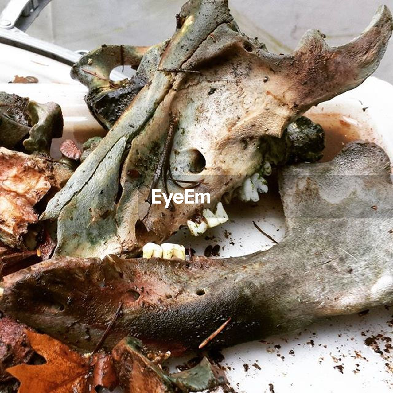 food, food and drink, bone, animal skull, close-up, no people, seafood, freshness, healthy eating, animal bone, indoors, day, ready-to-eat