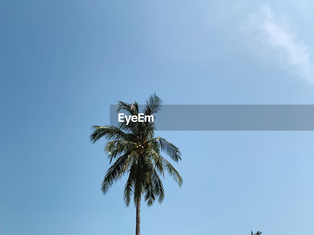 sky, palm tree, tree, plant, tropical climate, low angle view, growth, beauty in nature, no people, tranquility, day, nature, blue, copy space, outdoors, cloud - sky, tall - high, scenics - nature, coconut palm tree, tropical tree, palm leaf
