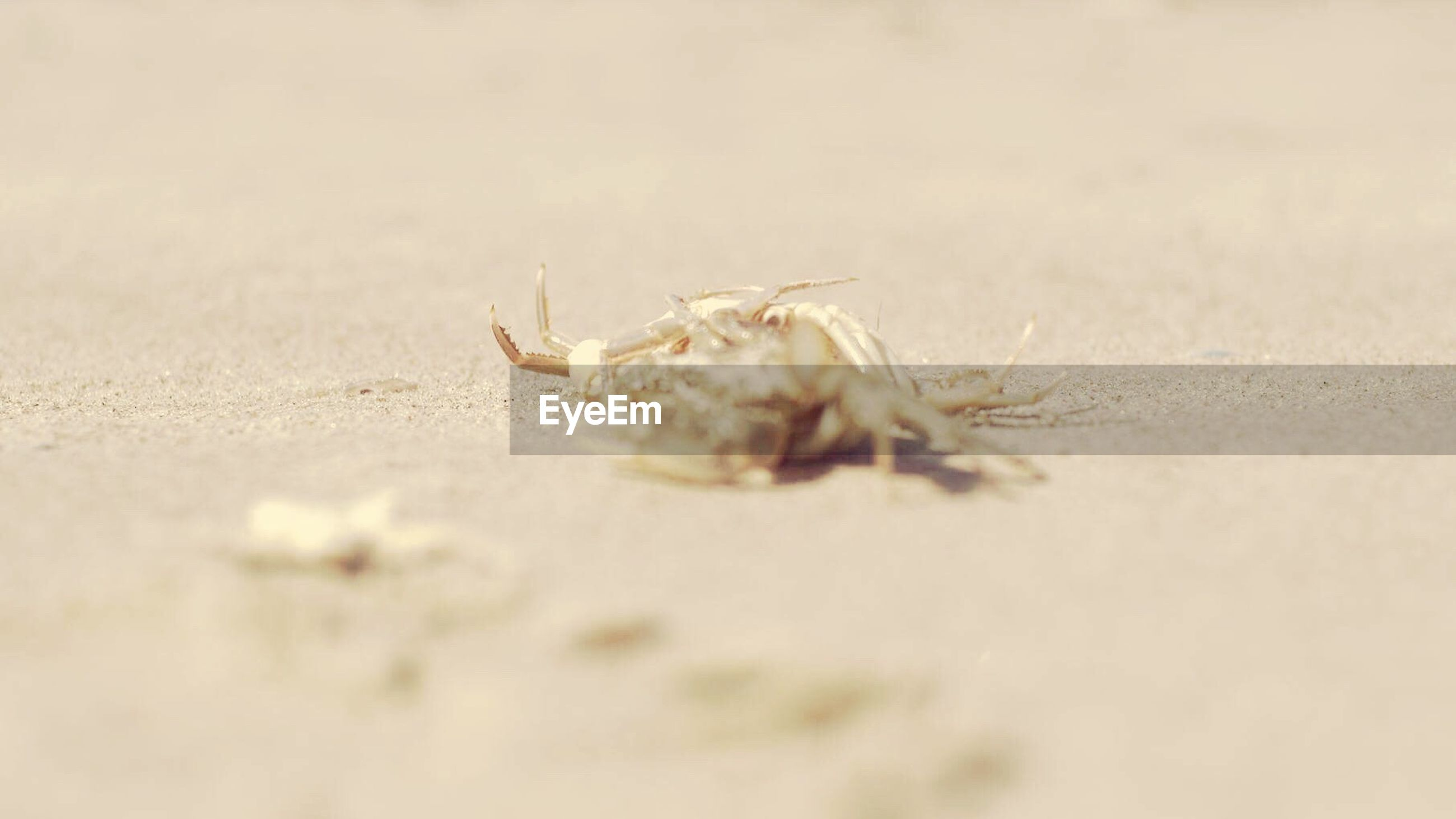 sand, one animal, beach, hermit crab, animal themes, animals in the wild, selective focus, close-up, animal wildlife, nature, day, no people, outdoors
