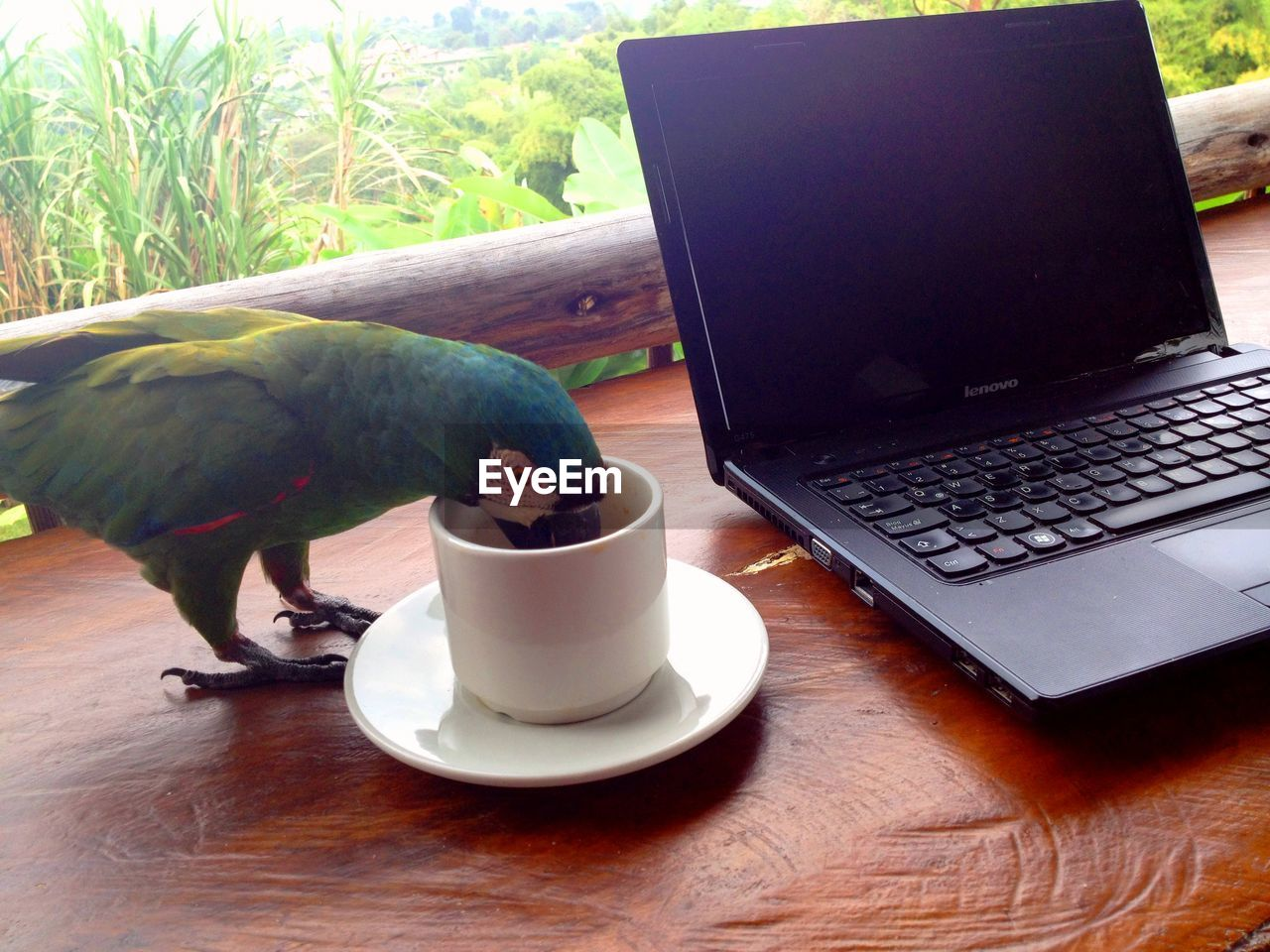 bird, animal themes, laptop, table, one animal, animals in the wild, indoors, animal wildlife, no people, wireless technology, technology, parrot, day, close-up, perching, nature, mammal