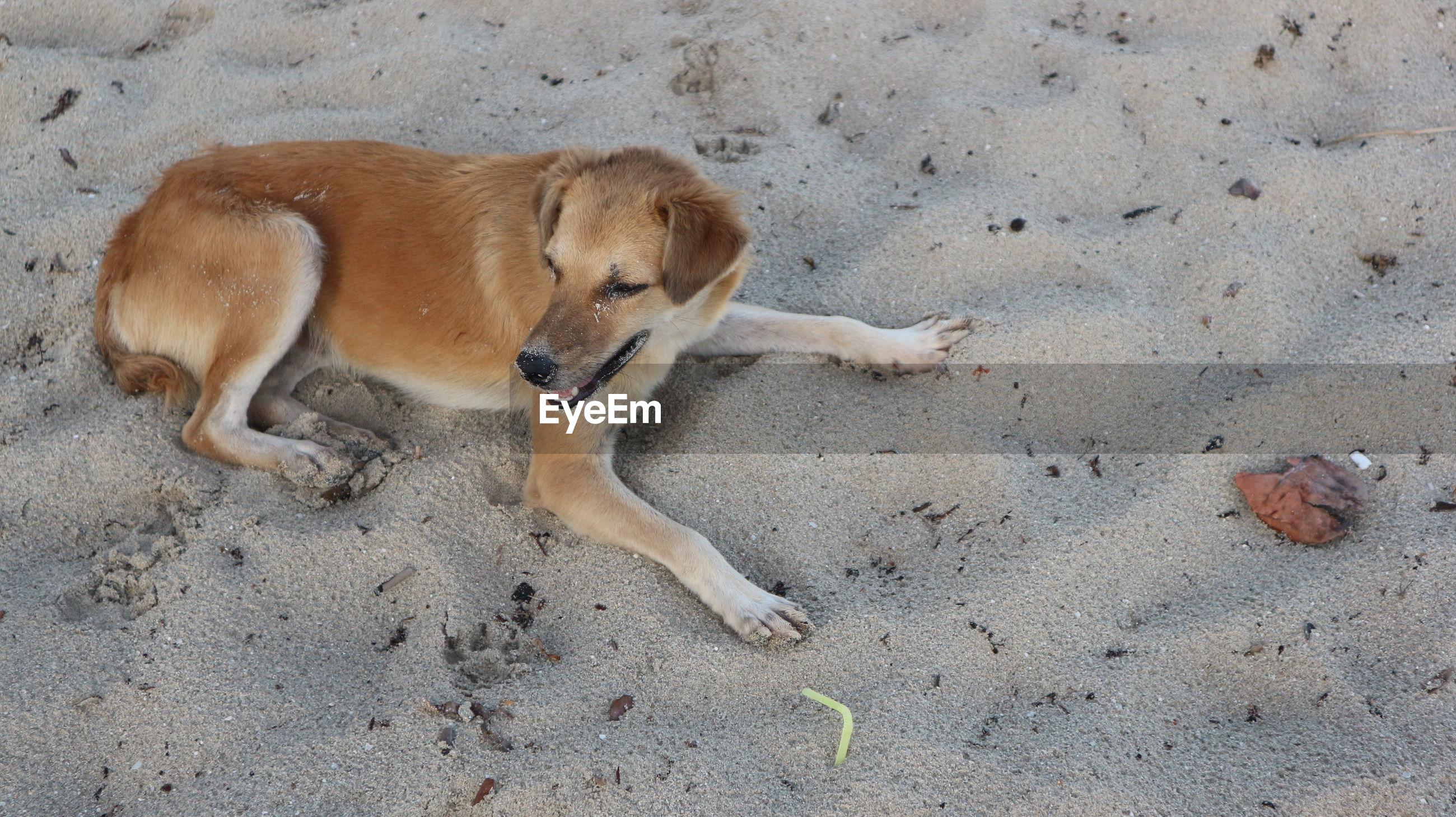 HIGH ANGLE VIEW OF A DOG LYING ON SAND