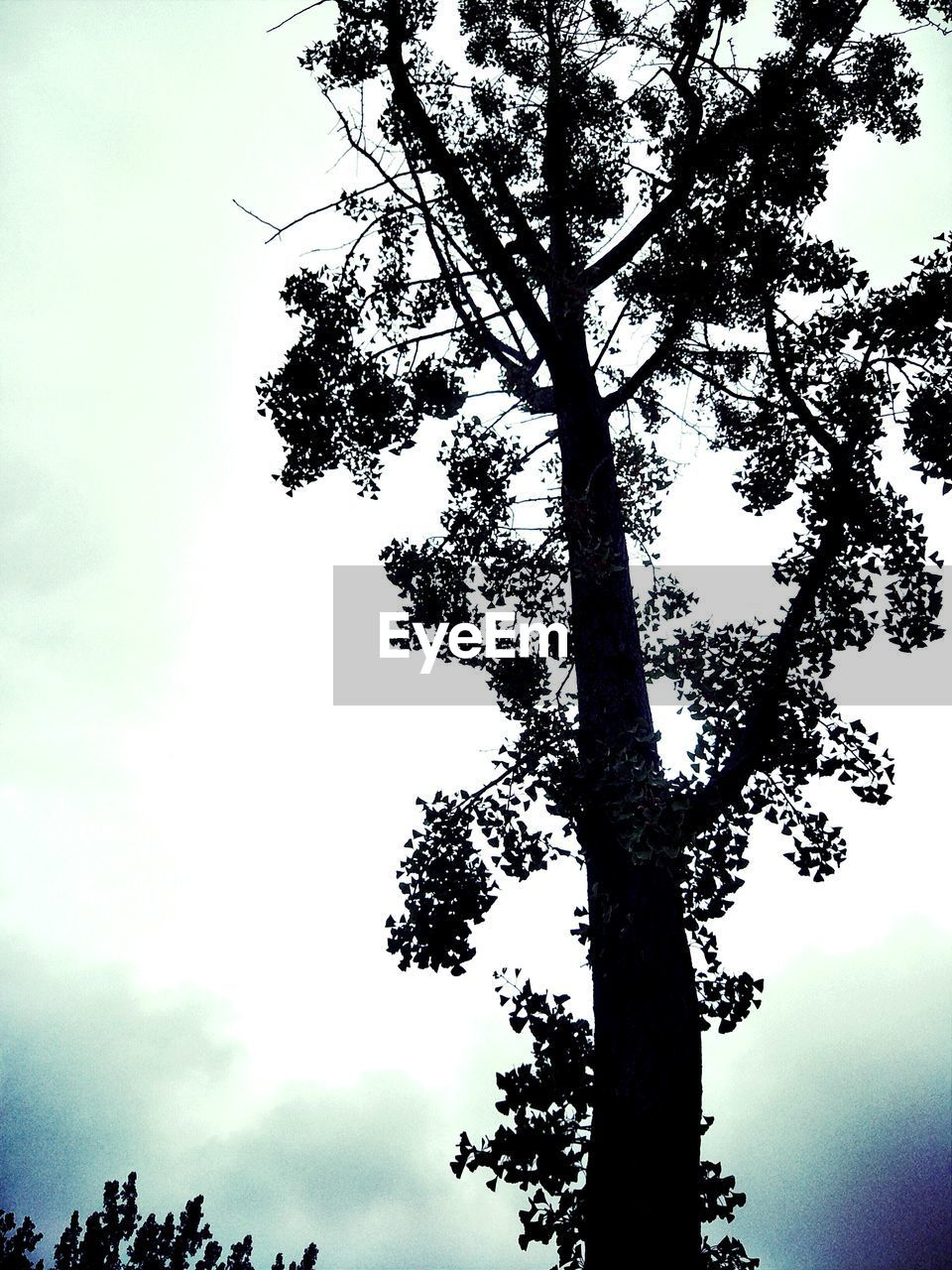 tree, nature, sky, low angle view, beauty in nature, growth, day, outdoors, tranquility, branch, tree trunk, scenics, no people