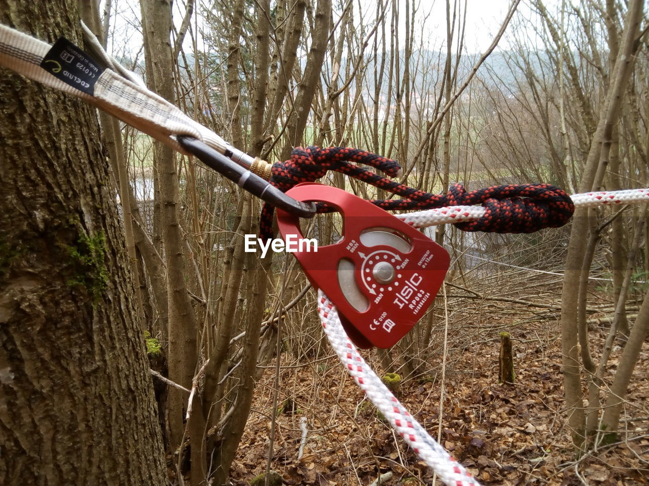 tree, security, safety, hanging, protection, bare tree, red, tree trunk, branch, outdoors, day, nature, padlock, no people, lock, forest, river, water, cold temperature, love lock, close-up