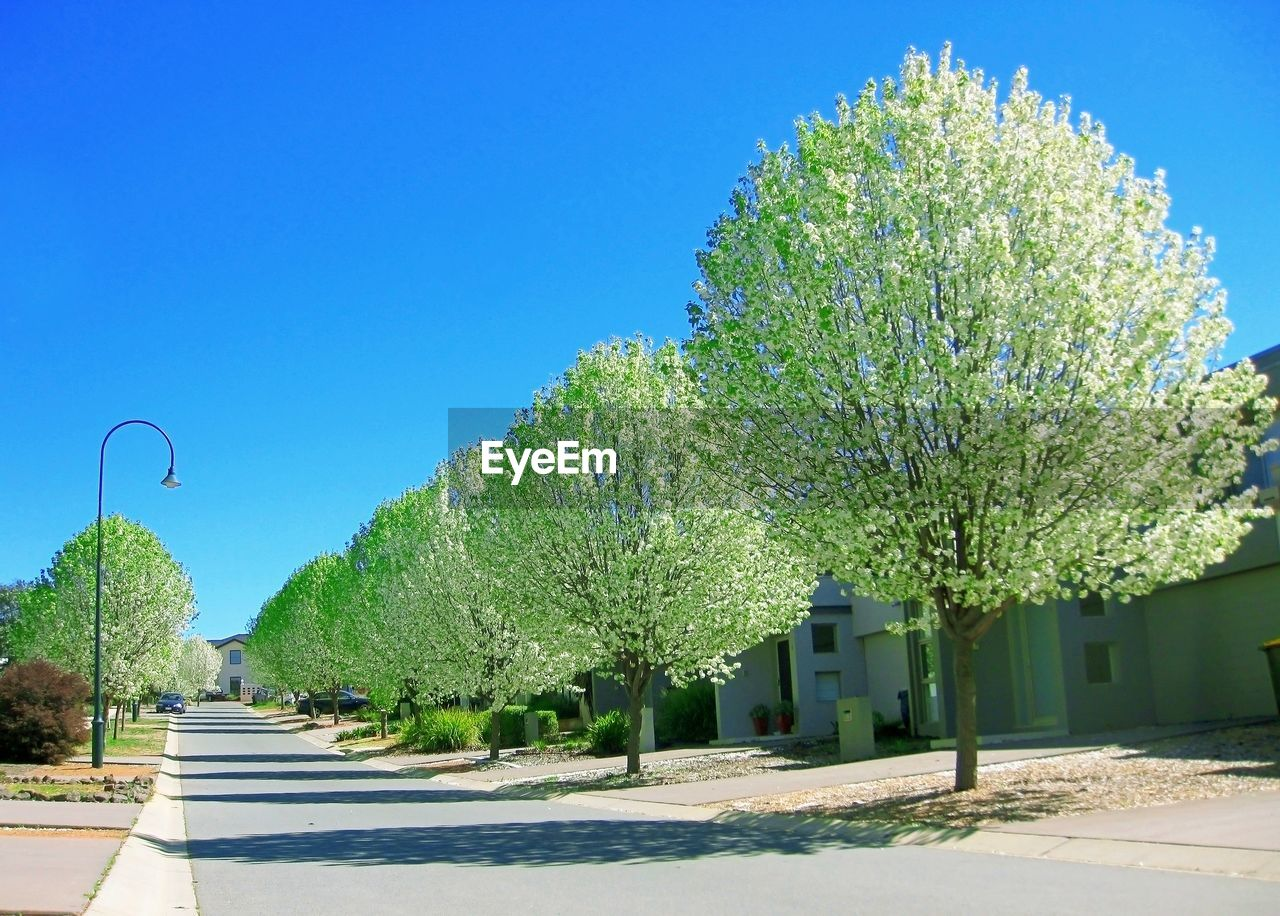 tree, blue, clear sky, day, road, outdoors, the way forward, green color, no people, sunlight, growth, architecture, building exterior, nature, sky